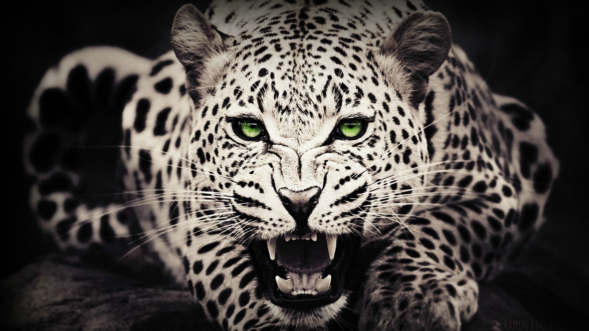 Awesome Leopard Background