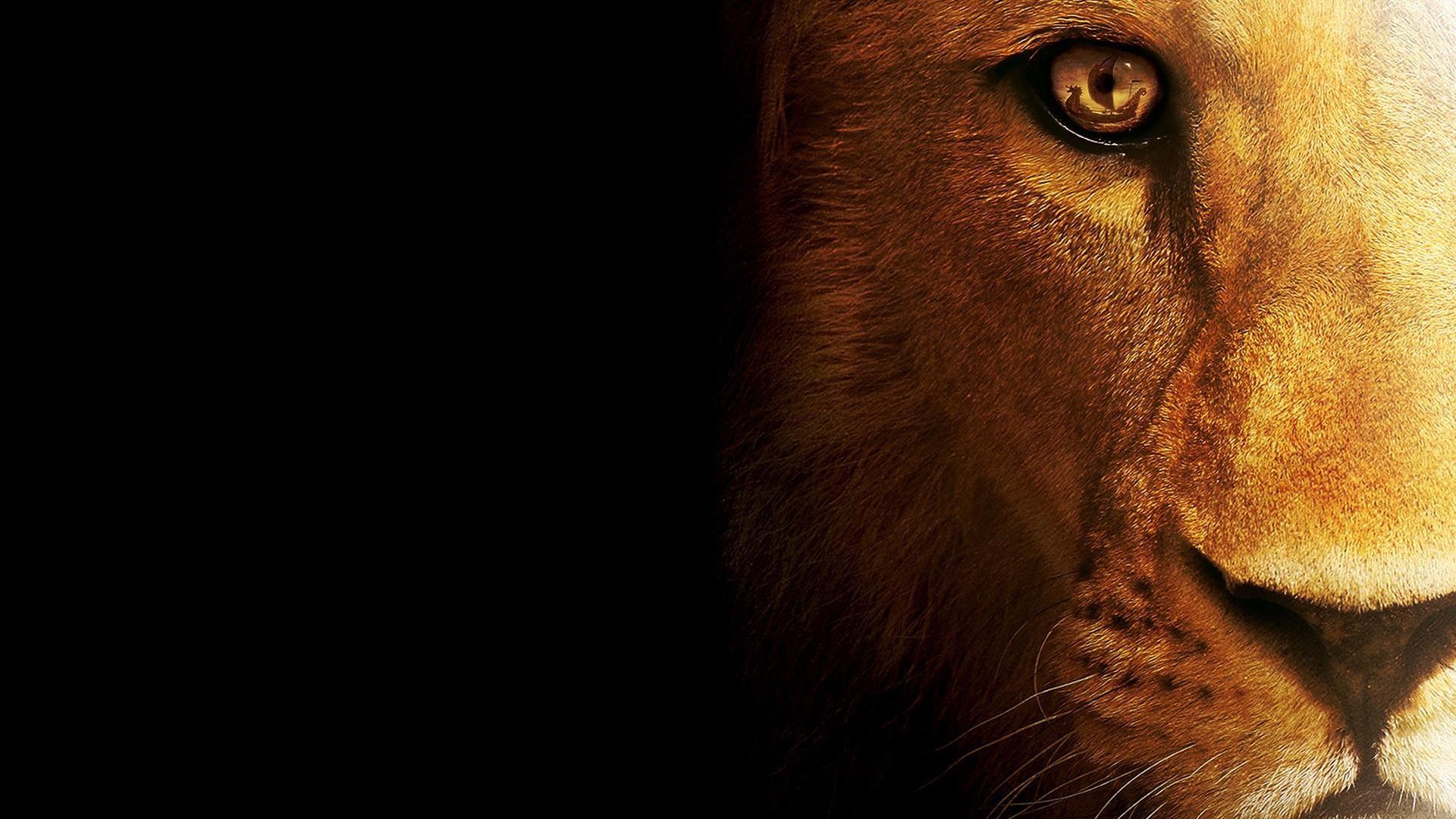 Title. Lion face 🦁