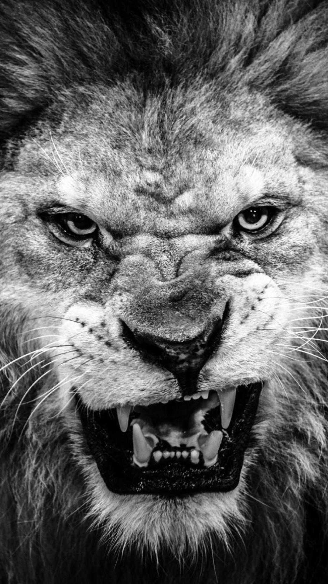 Dark Fierce Lion Face Macro iPhone 6 wallpaper