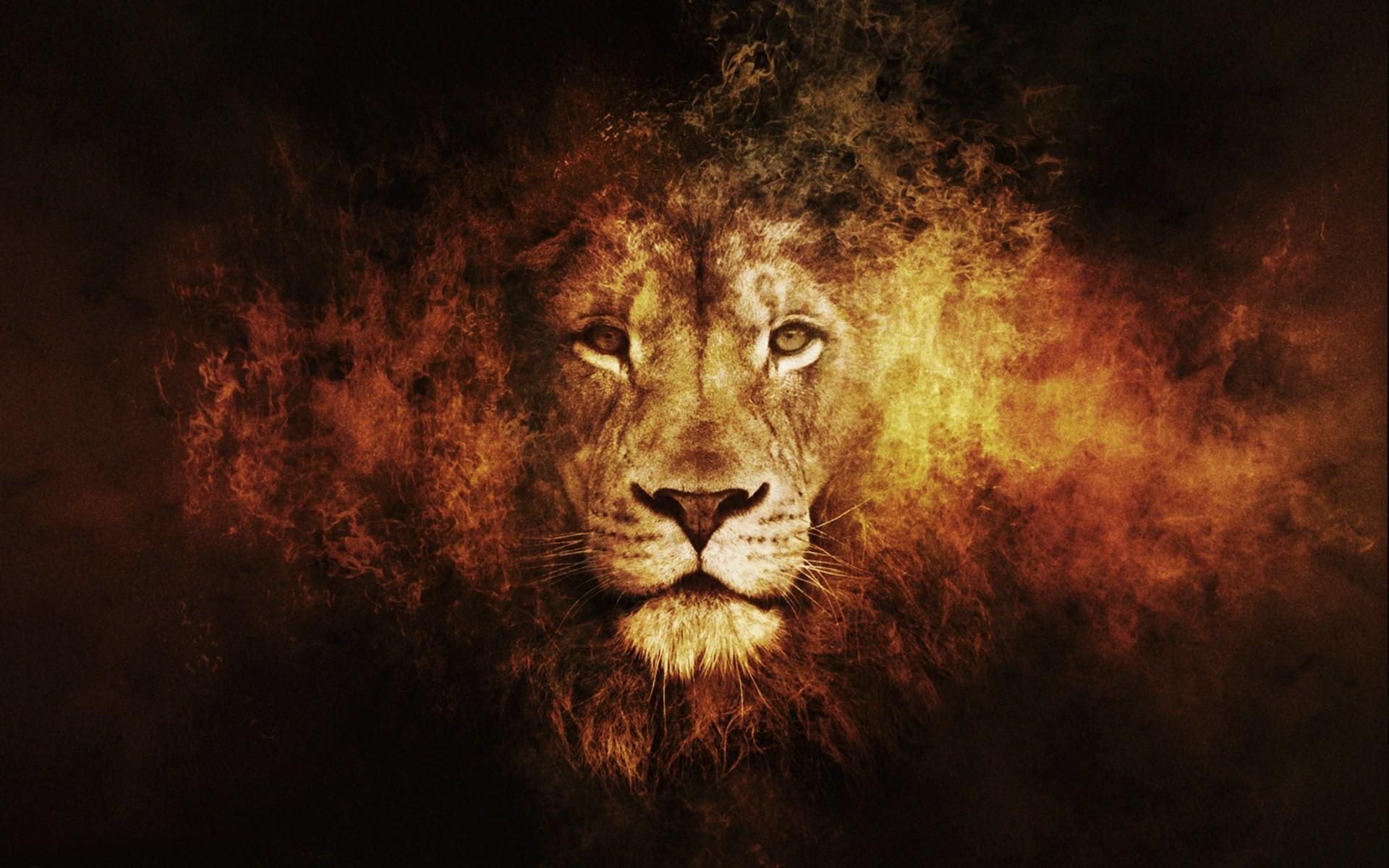 Abstract Lion Face Photos