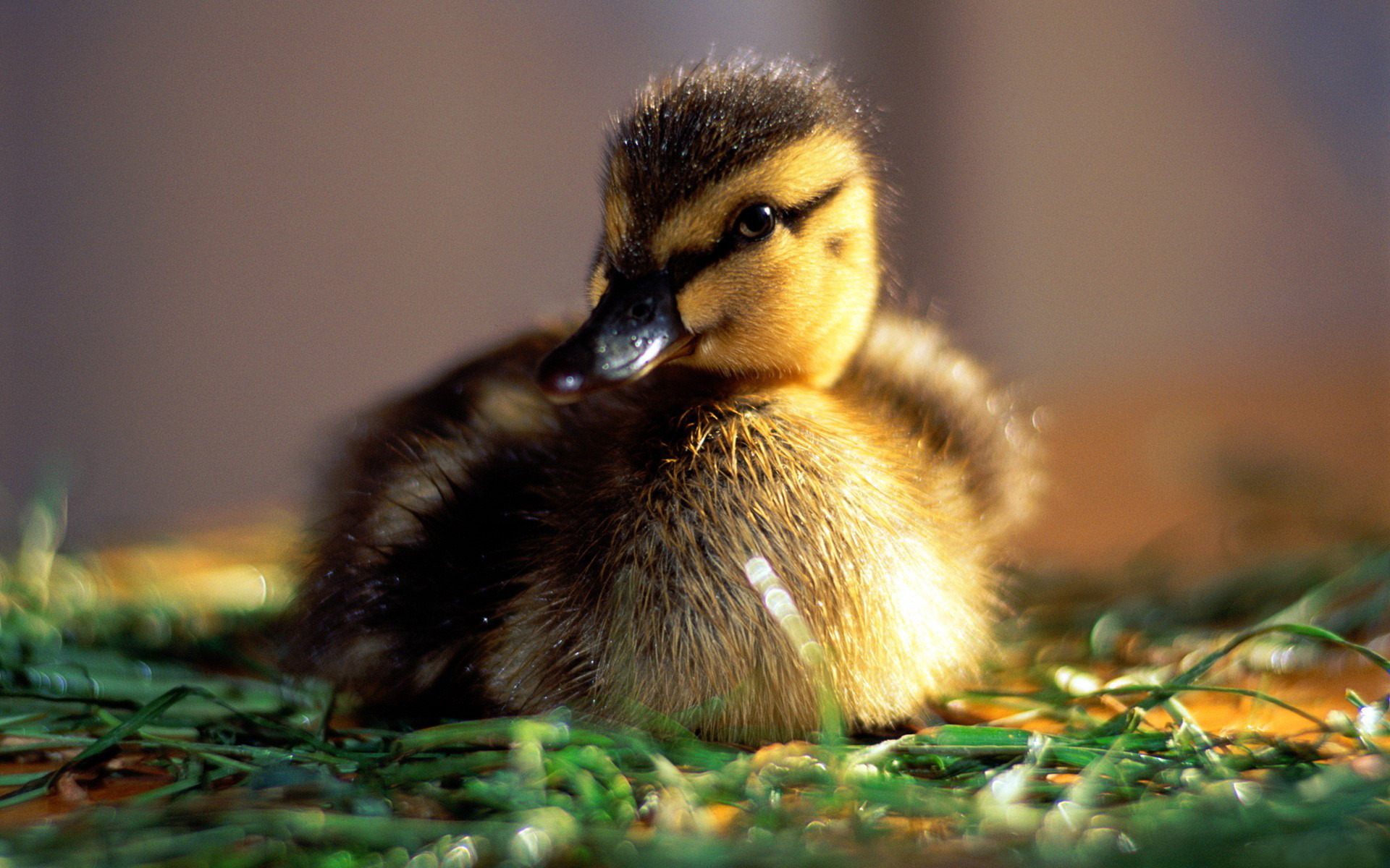 Baby Animal Wallpaper HD Images One HD Wallpaper Pictures Baby Animal  Pictures Wallpapers Wallpapers)
