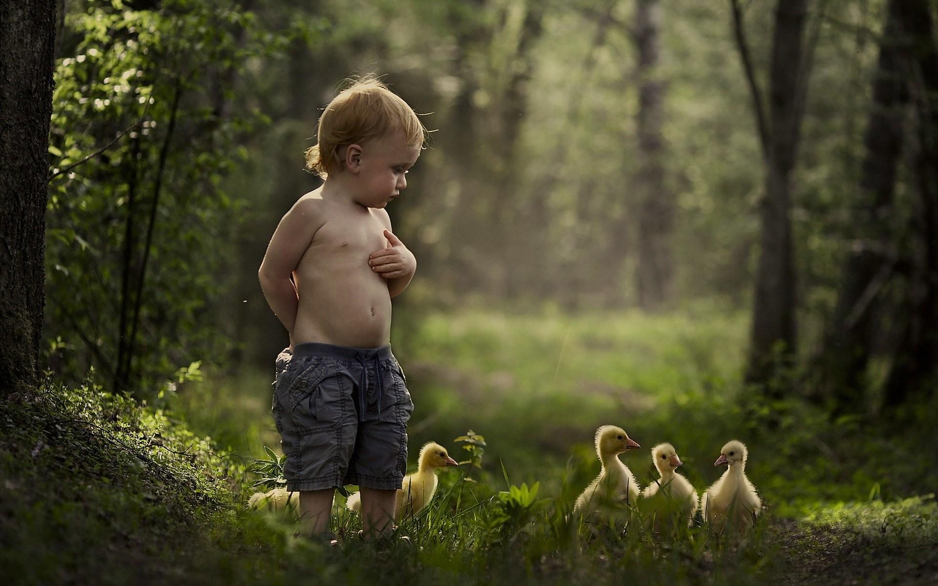 Mood malchik summer duck baby bird child children cute wallpaper |  | 433474 | WallpaperUP