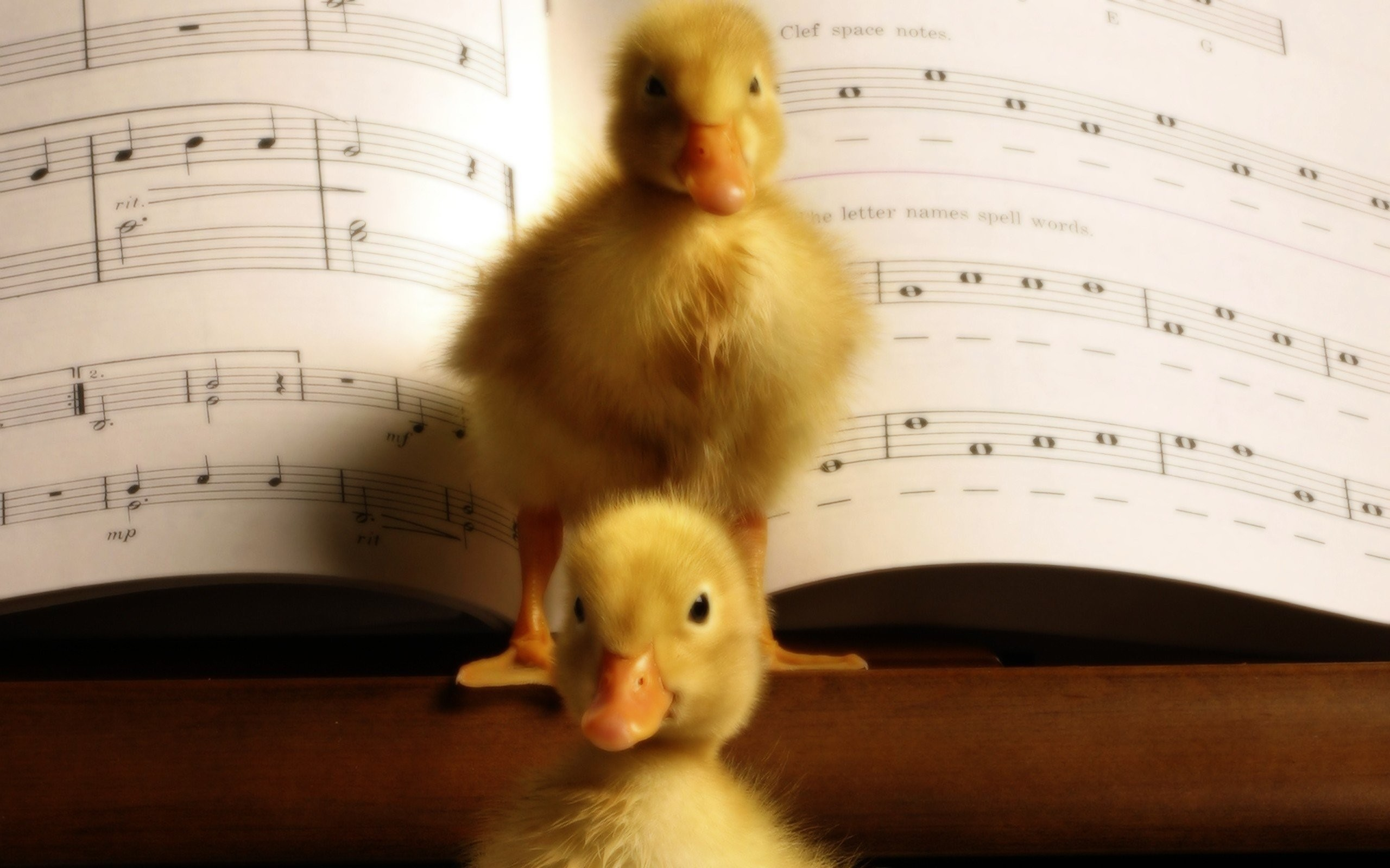 Birds animals ducks duckling musical musical notes baby birds wallpaper |  | 236569 | WallpaperUP