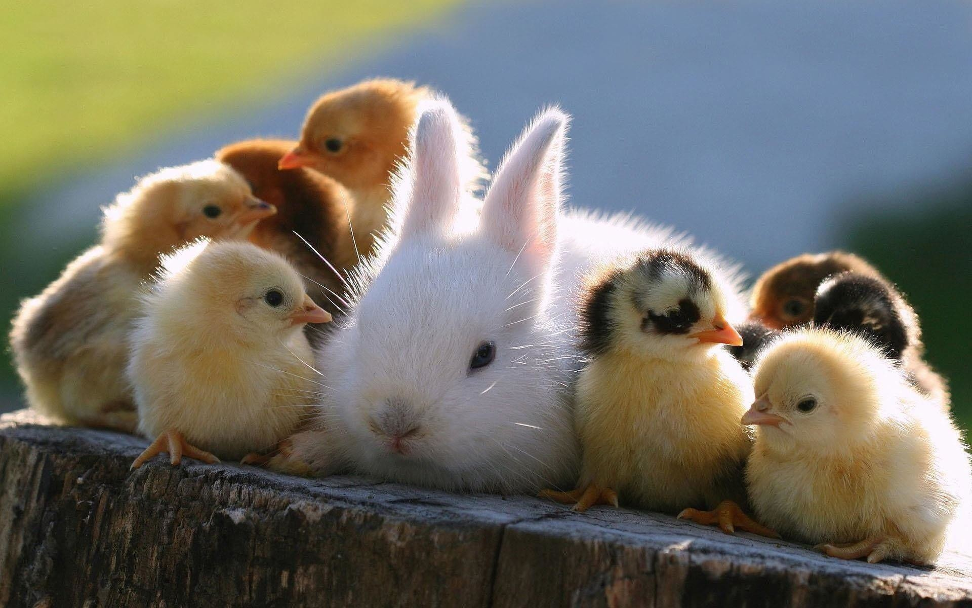 Animals For > Cute Rabbits And Bunnies Wallpaper