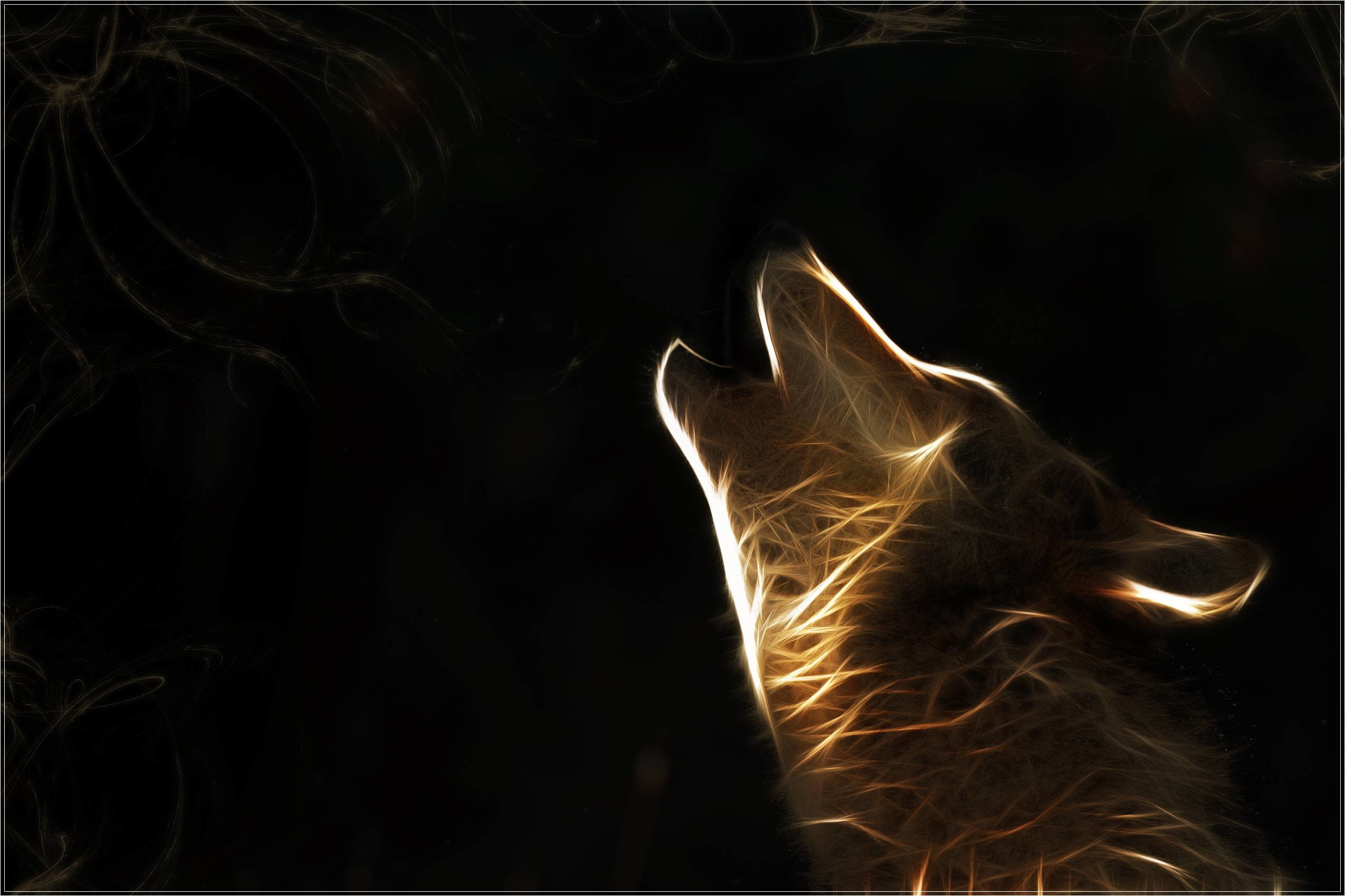 Wallpaper HD Wolf 18 16527 Wallpaper and Background .