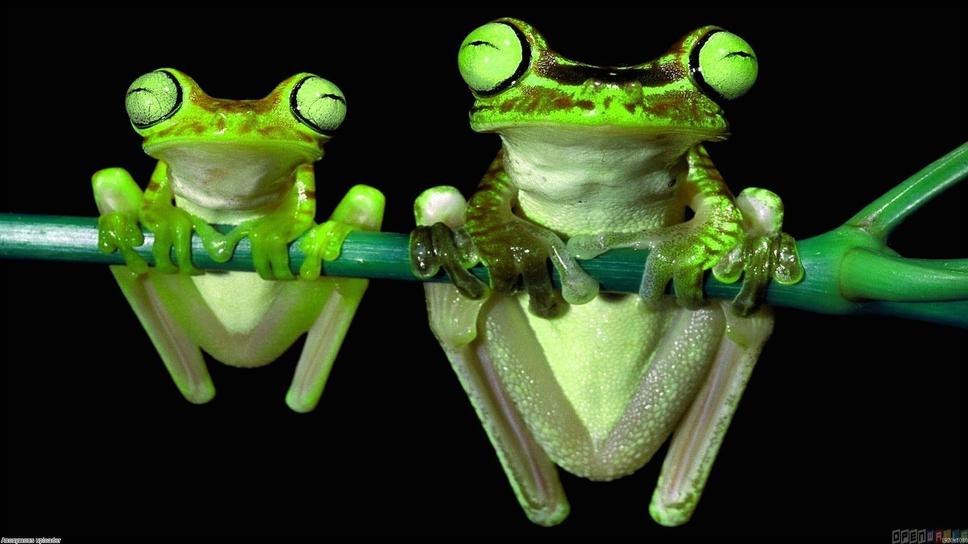 Cute Frog Wallpaper Background For Desktop Wallpaper 1920 x 1080 px 623.08  KB clipart blue cartoon