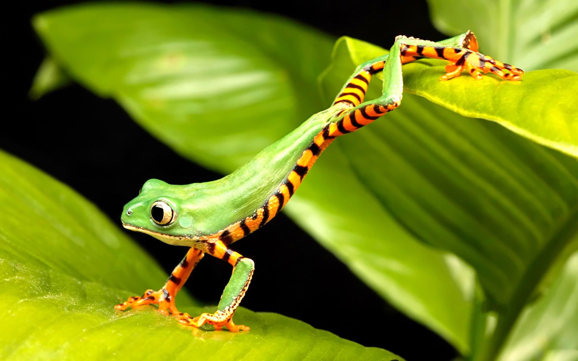 Frogs Wallpaper Cute Little Frogs Wallpaper   HD Wallpapers   Pinterest    Wallpaper