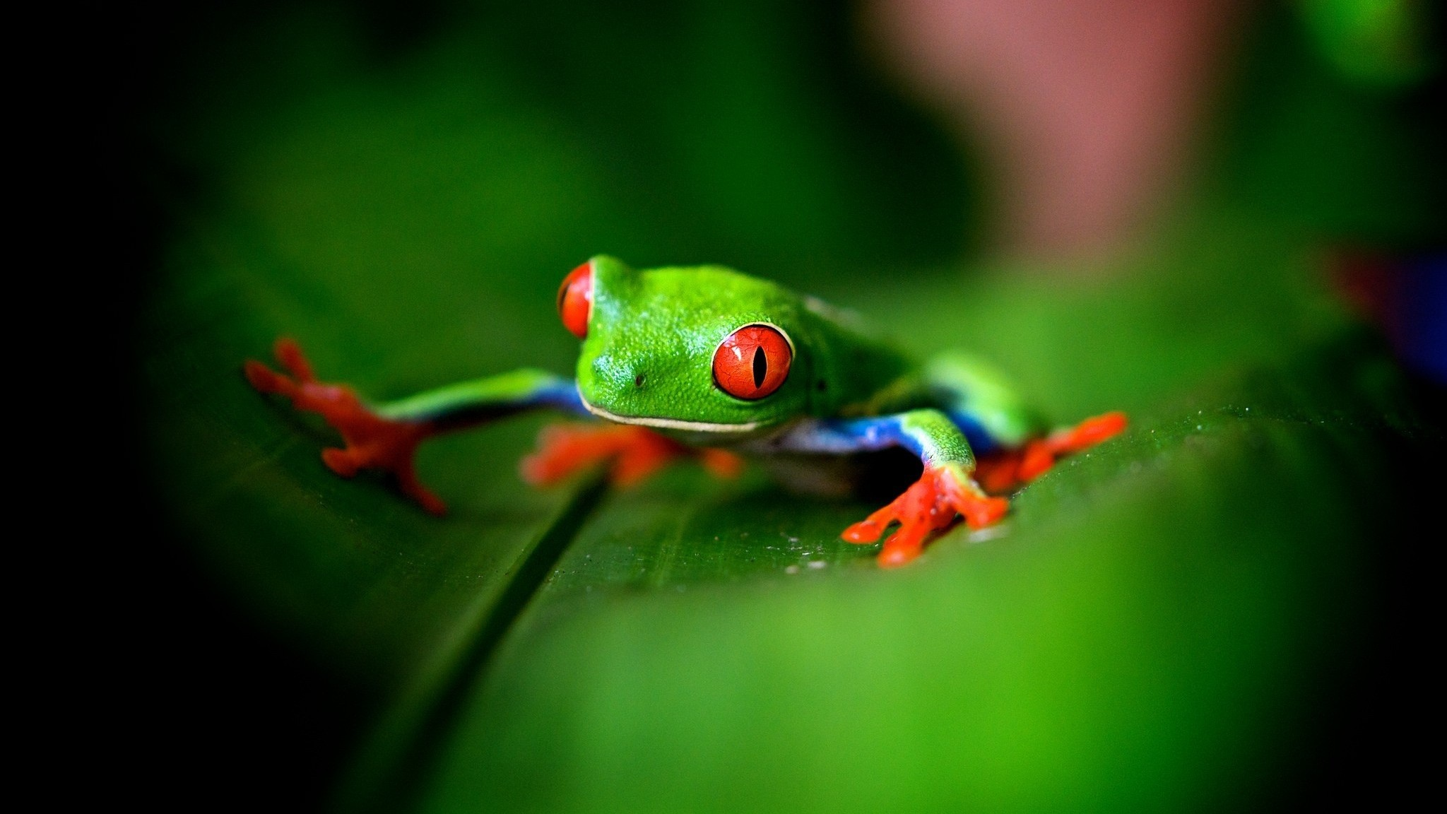 Cute Frog Wallpaper High Quality Resolution …