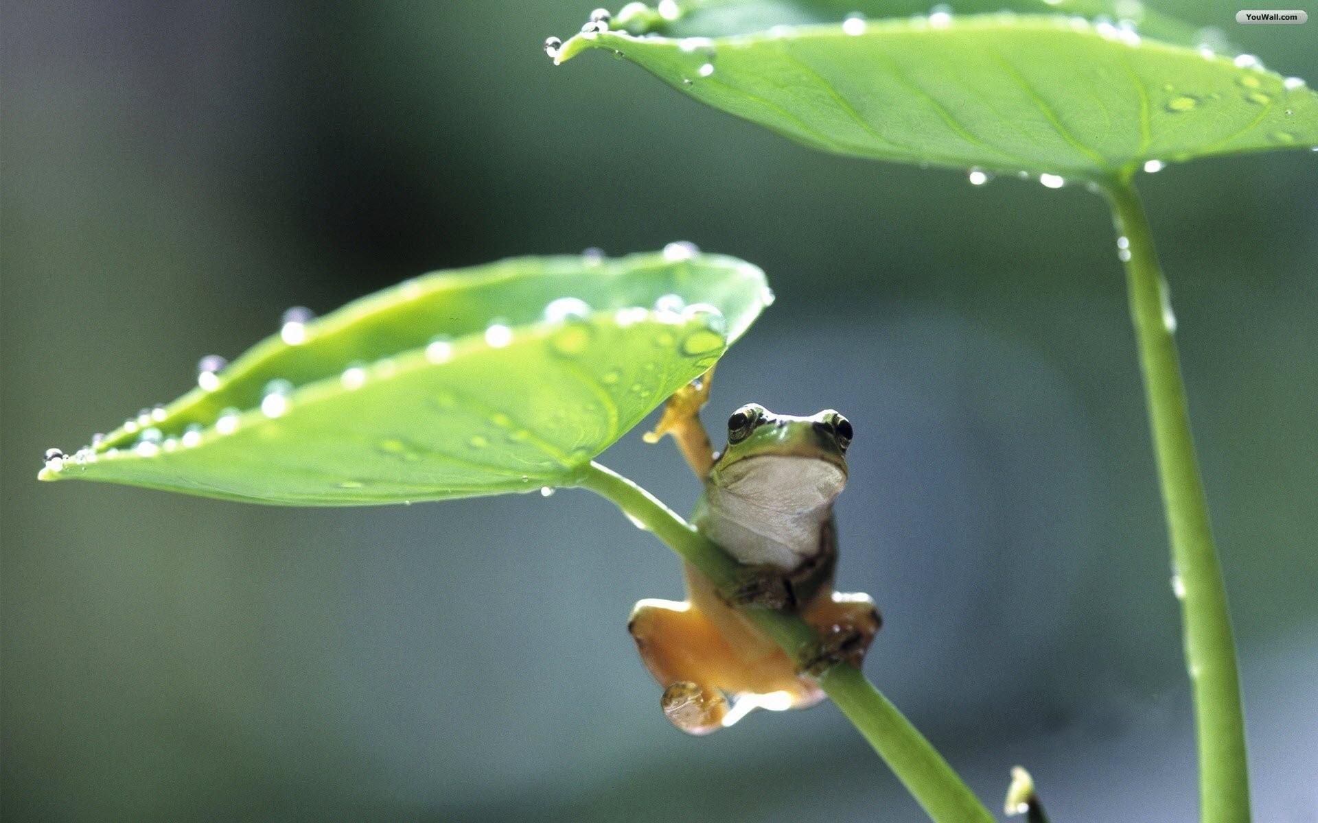 Frog Wallpapers …