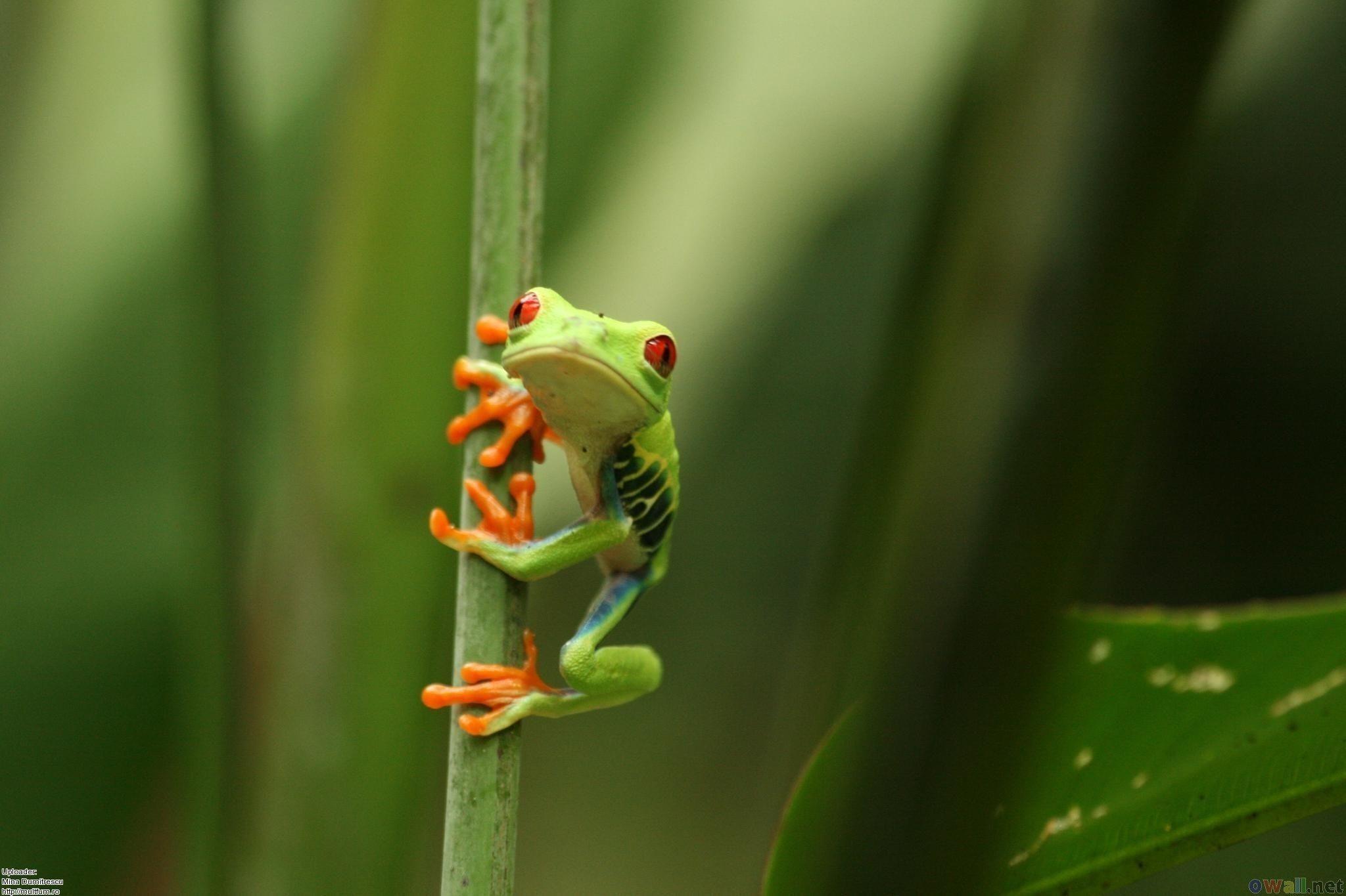 Cartoon <b>Frog Wallpaper</b> – WallpaperSafari