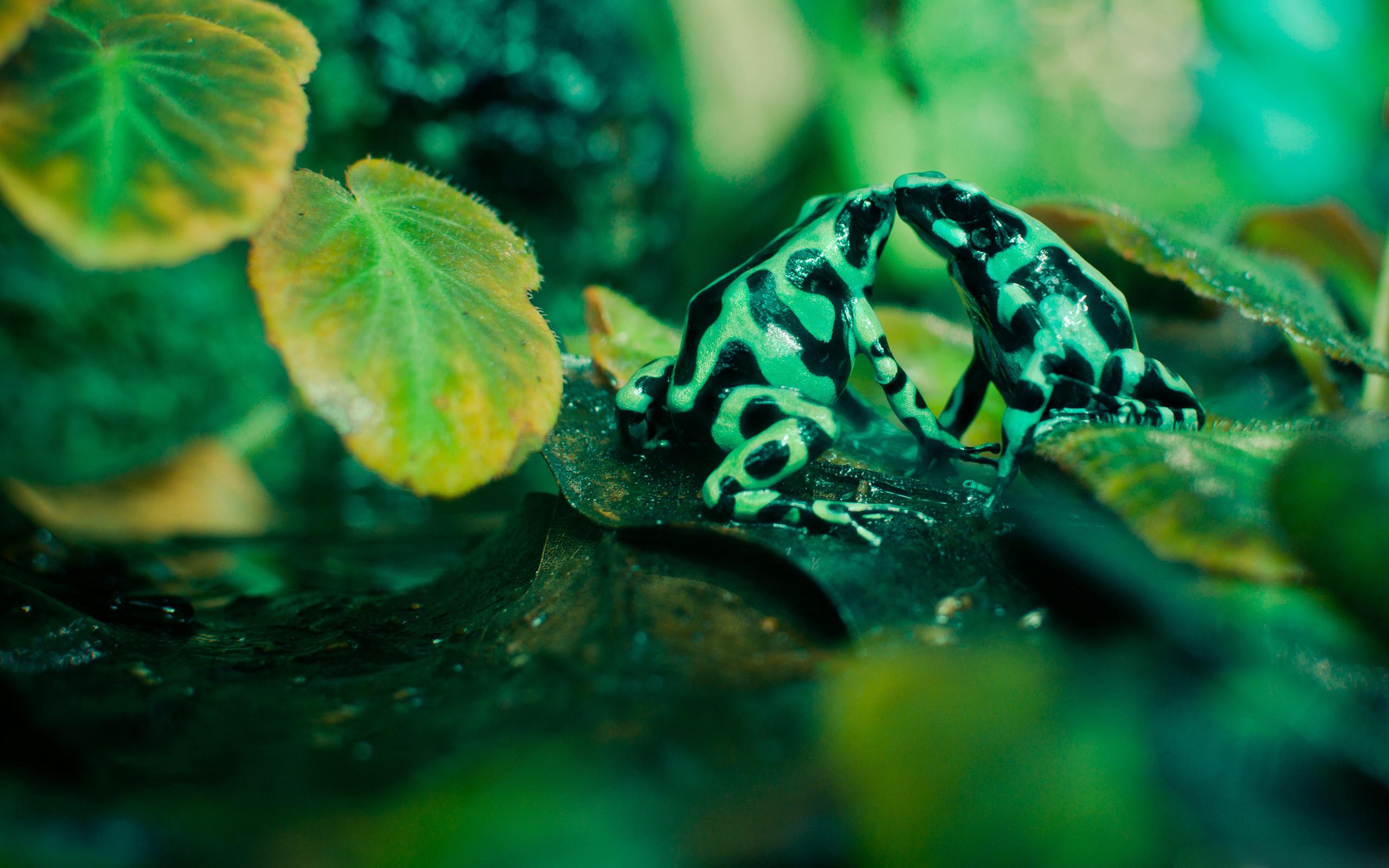 Cute Frog Wallpaper Desktop Background