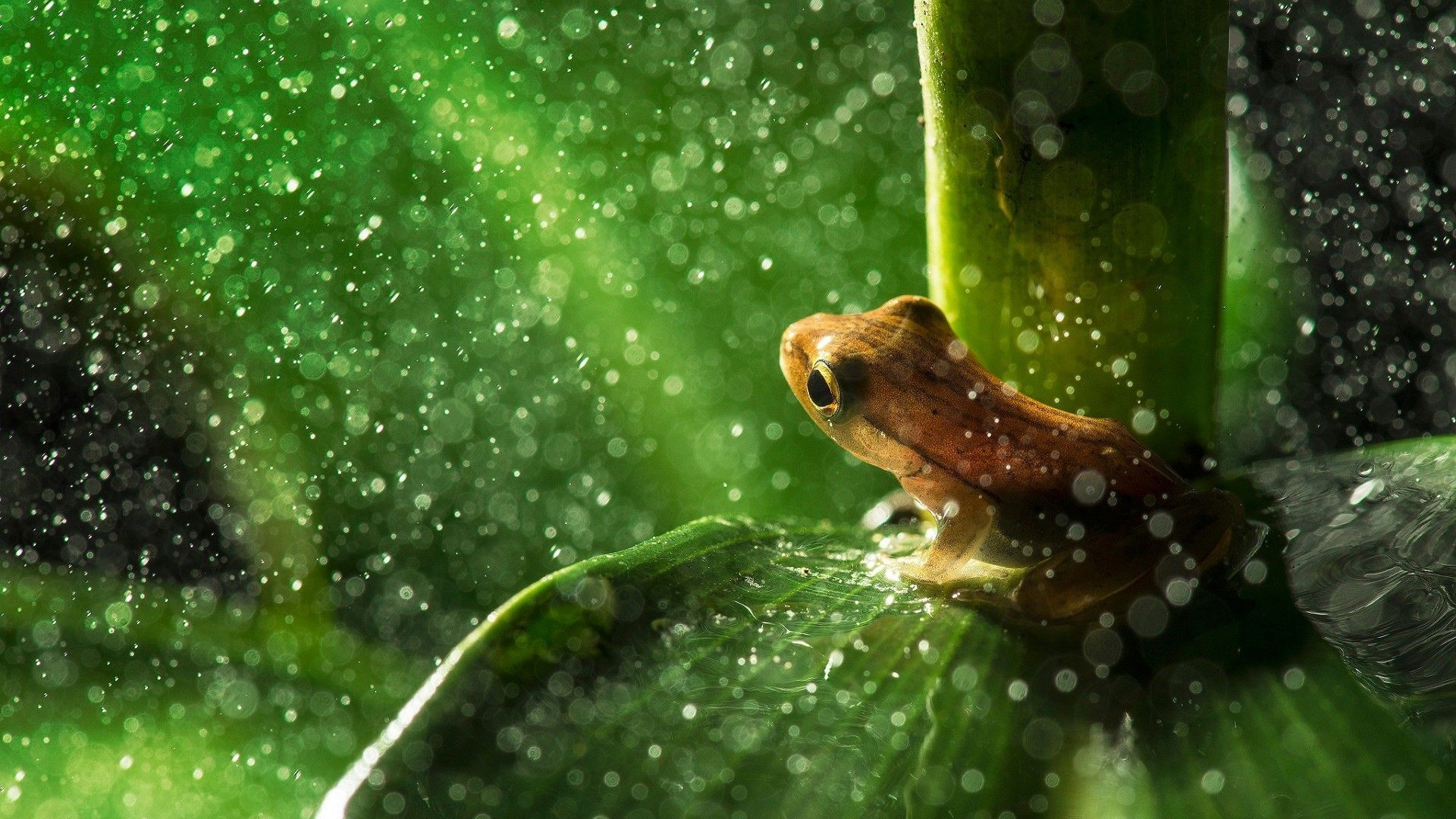 Cute Frog Wallpaper For Iphone