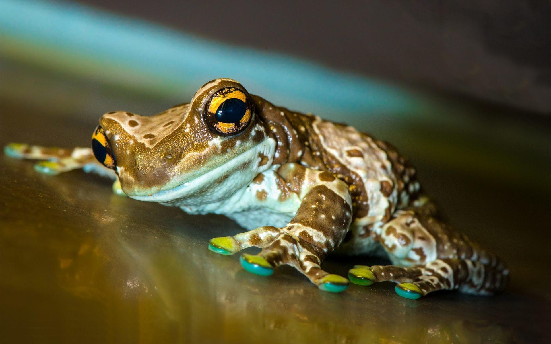 Cute Frog Wallpaper Wide