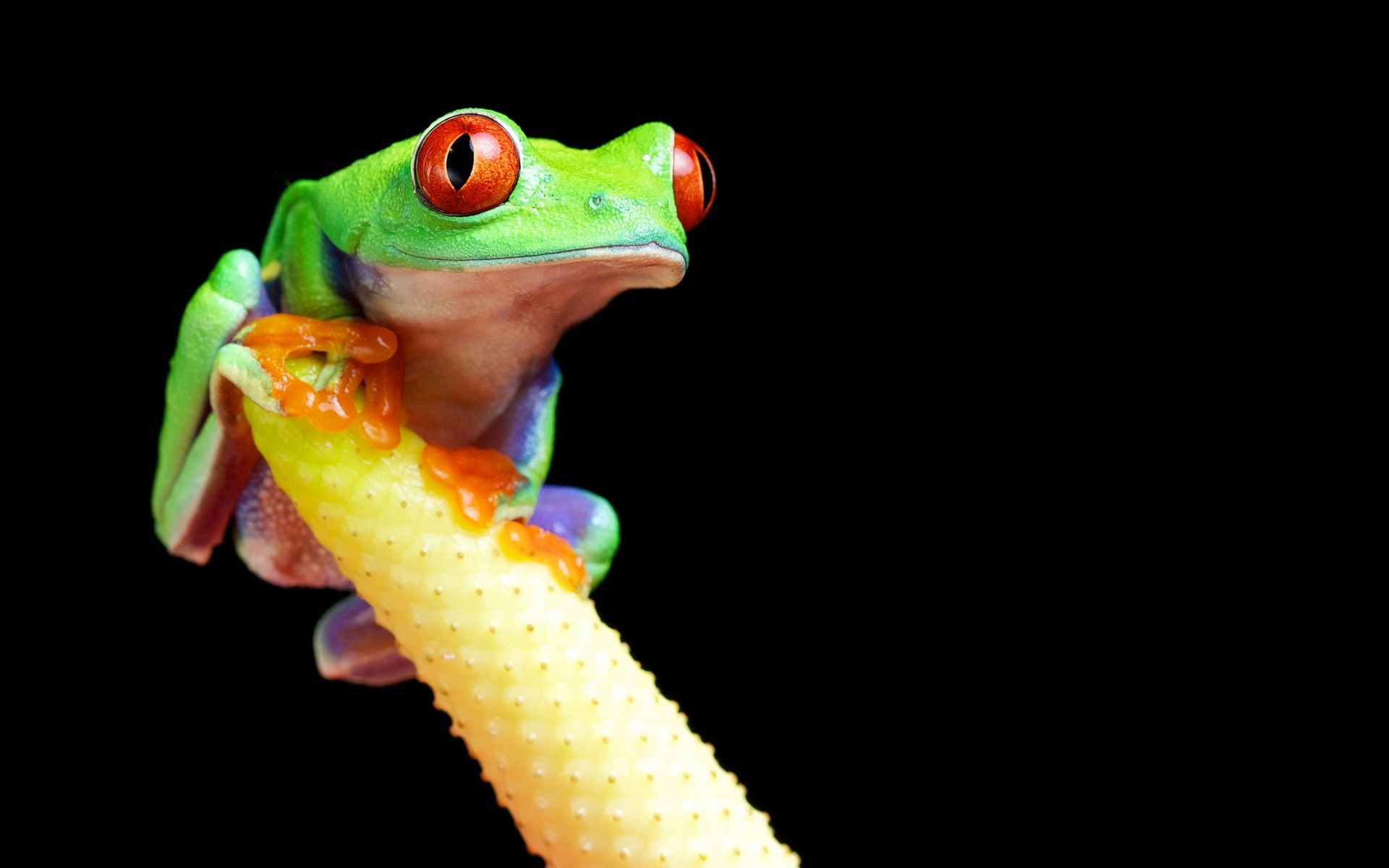 Tree Frog Wallpapers Android