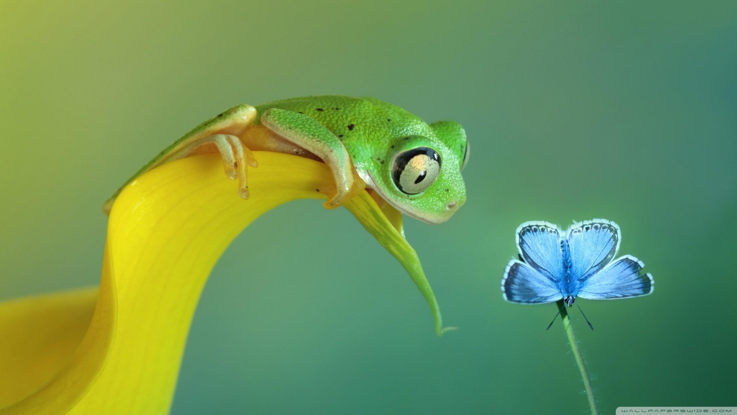 Frogs, ID: AC99, Mirtha Shehorn