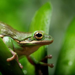 Animated Frog