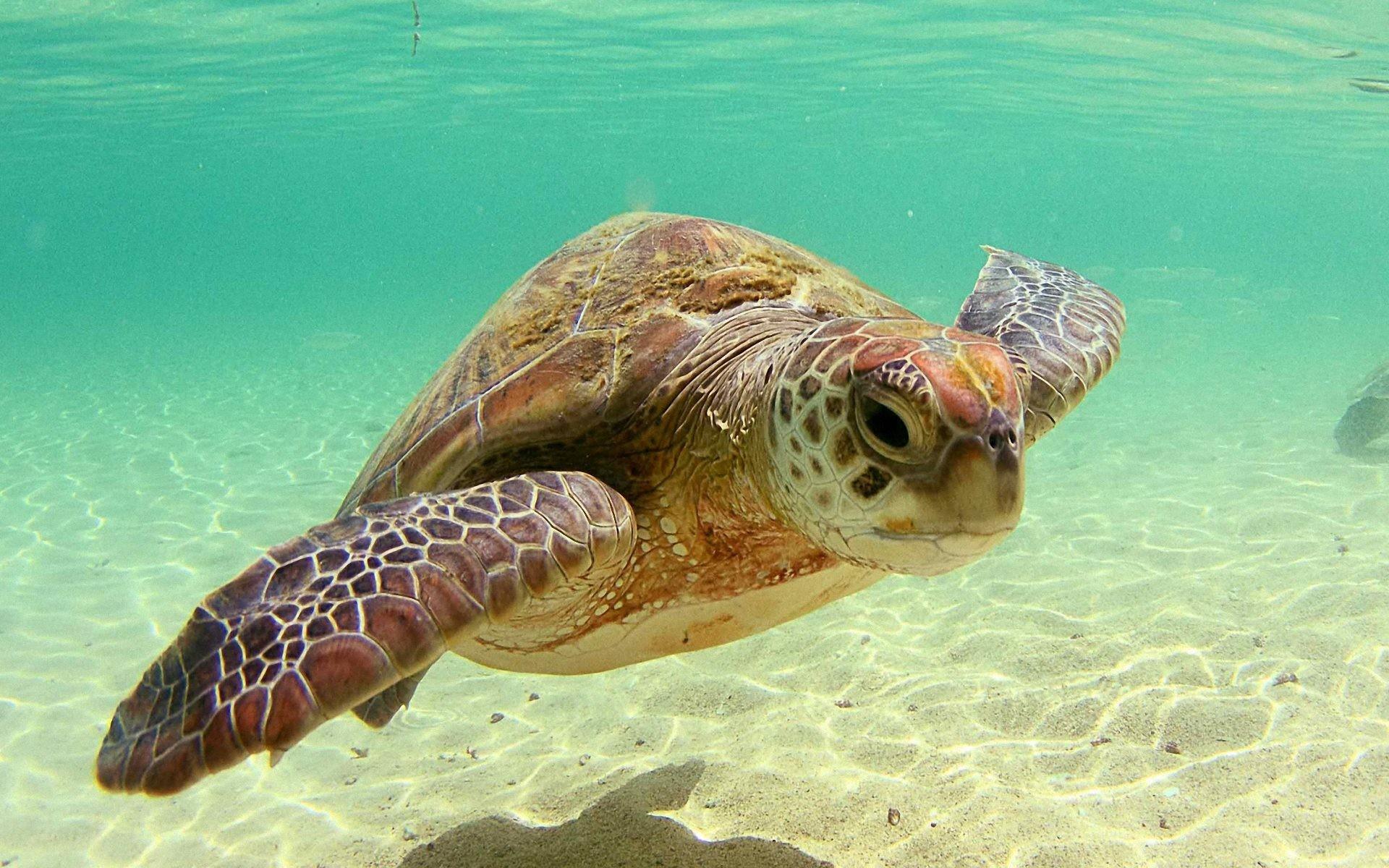 Beautiful Sea Turtle Background