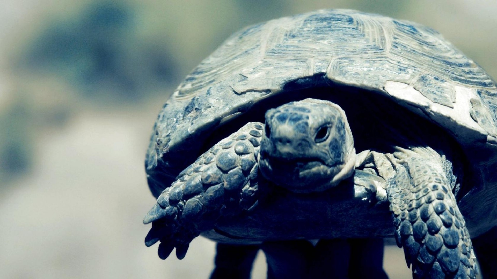 Preview wallpaper turtle, shell, feet, head 1920×1080