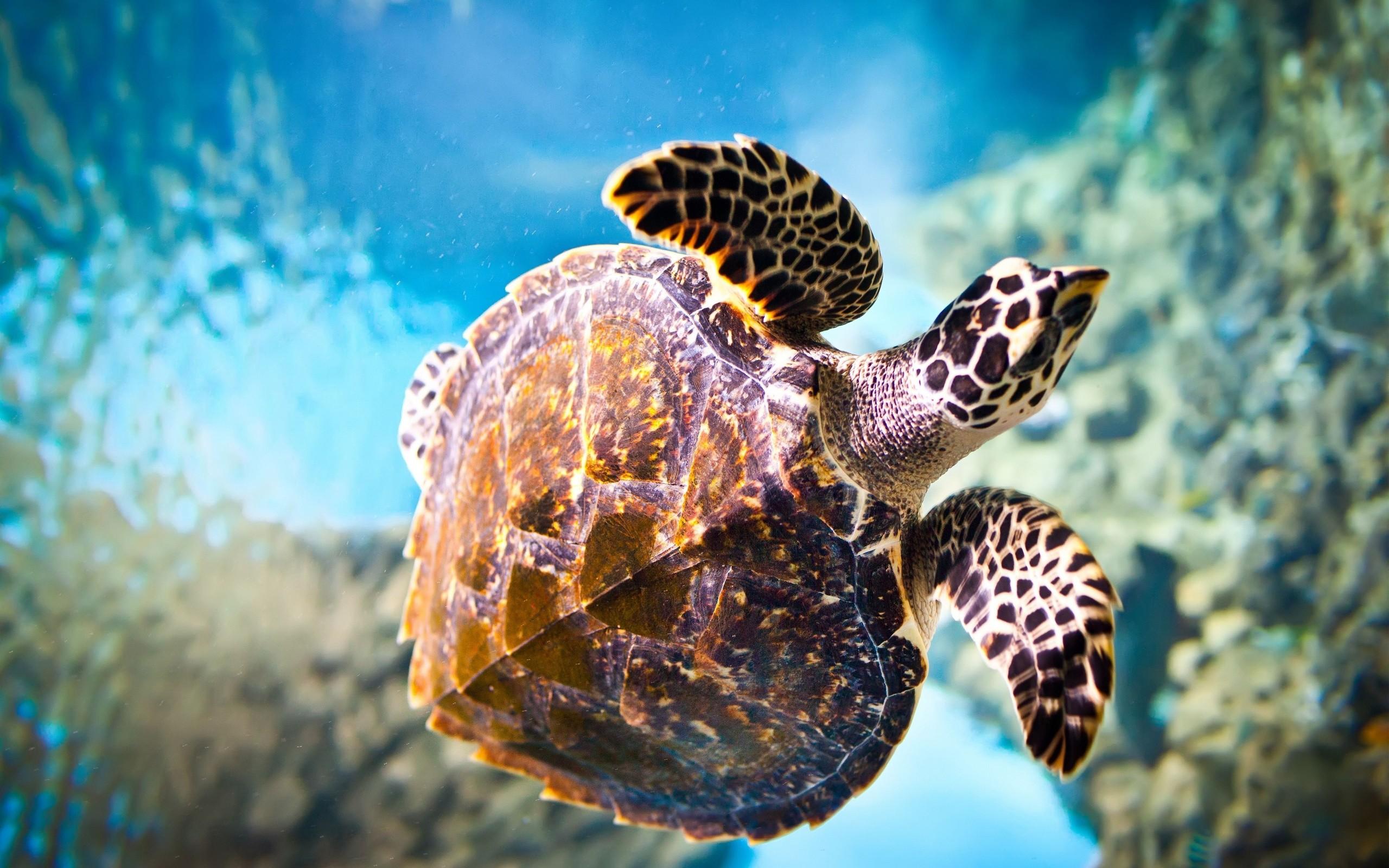 Turtle, Close Up, Underwater, Animal wallpaper thumb