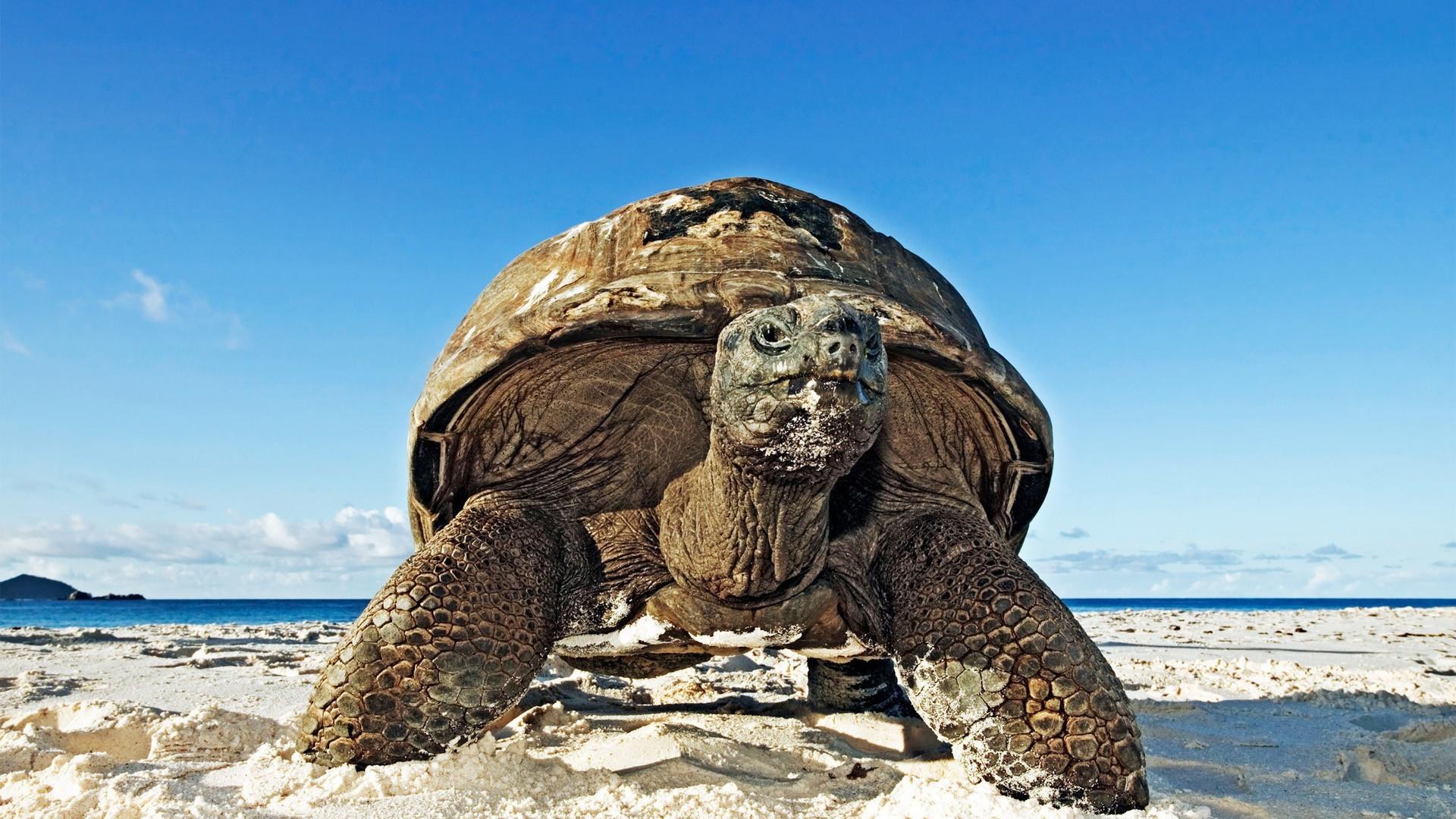 Big Turtle Beach HD Wallpapers.