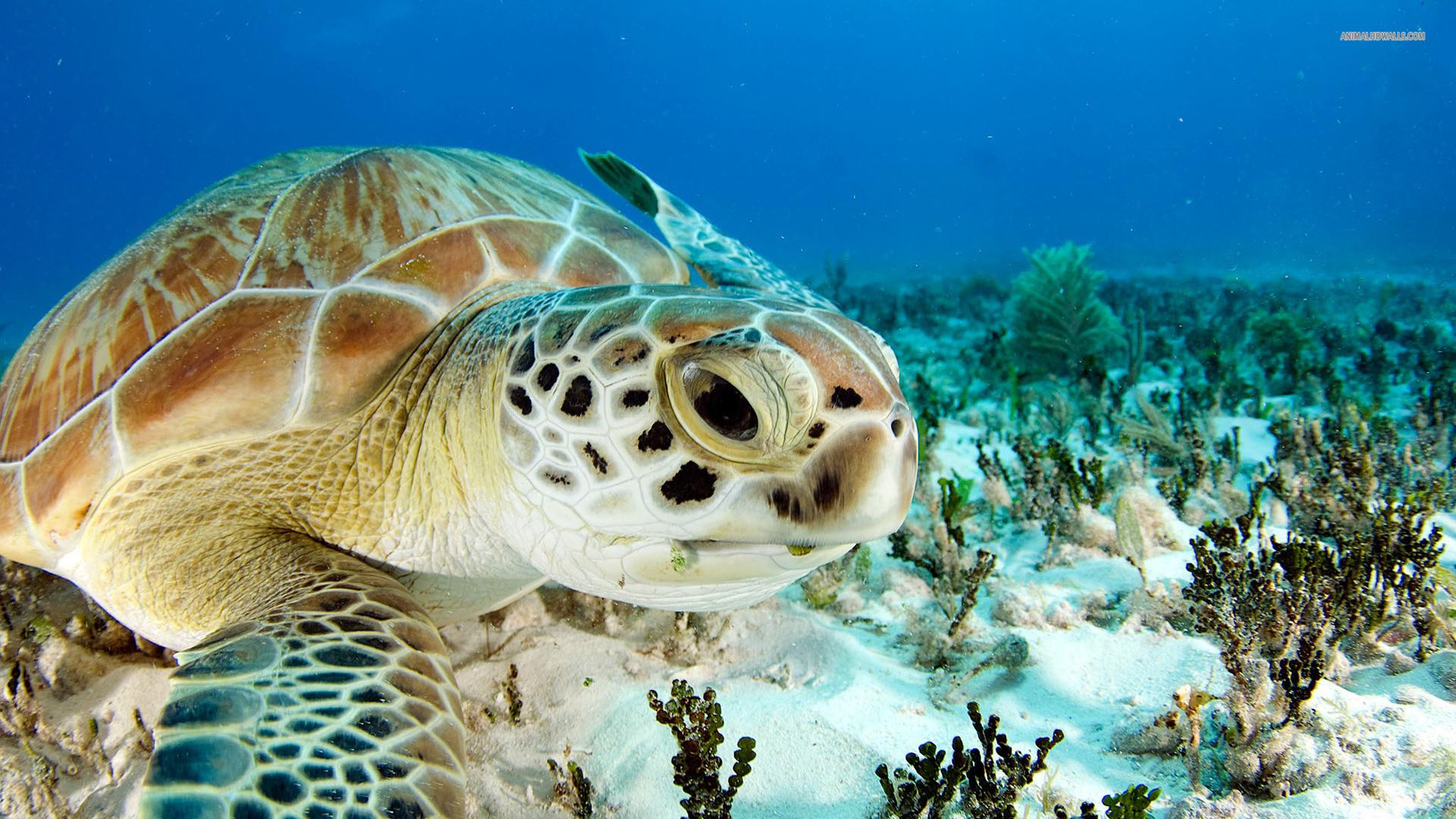 animal totem :: sea turtle
