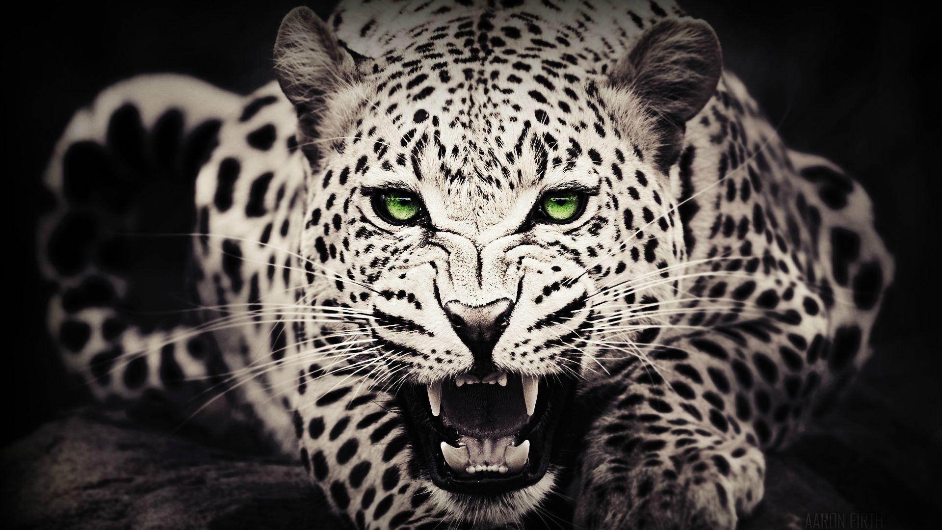 Amazing Leopard Wallpaper