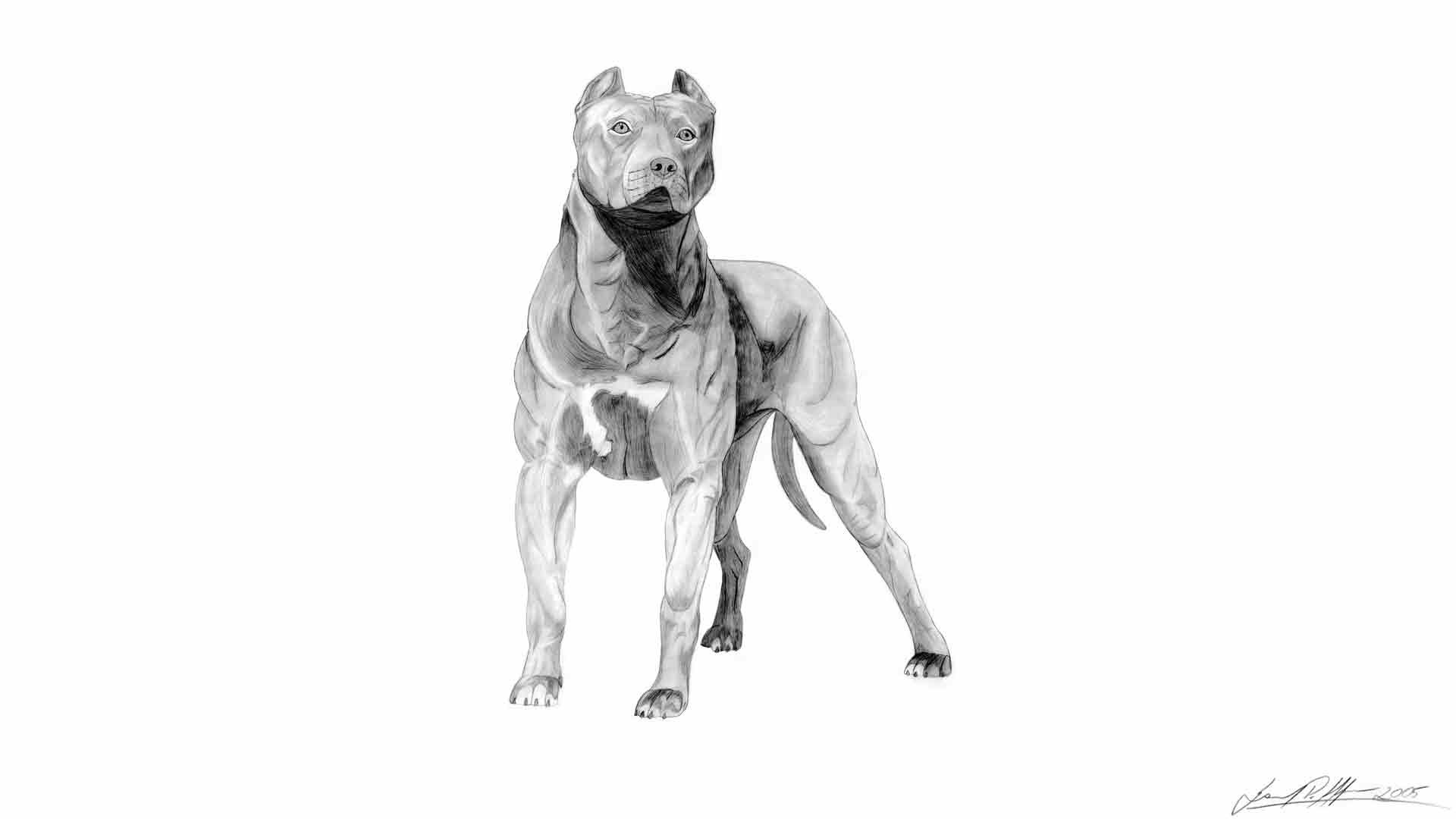 51 Pit Bull Dogs Free Pitbull Full Hd Wallpaper with .