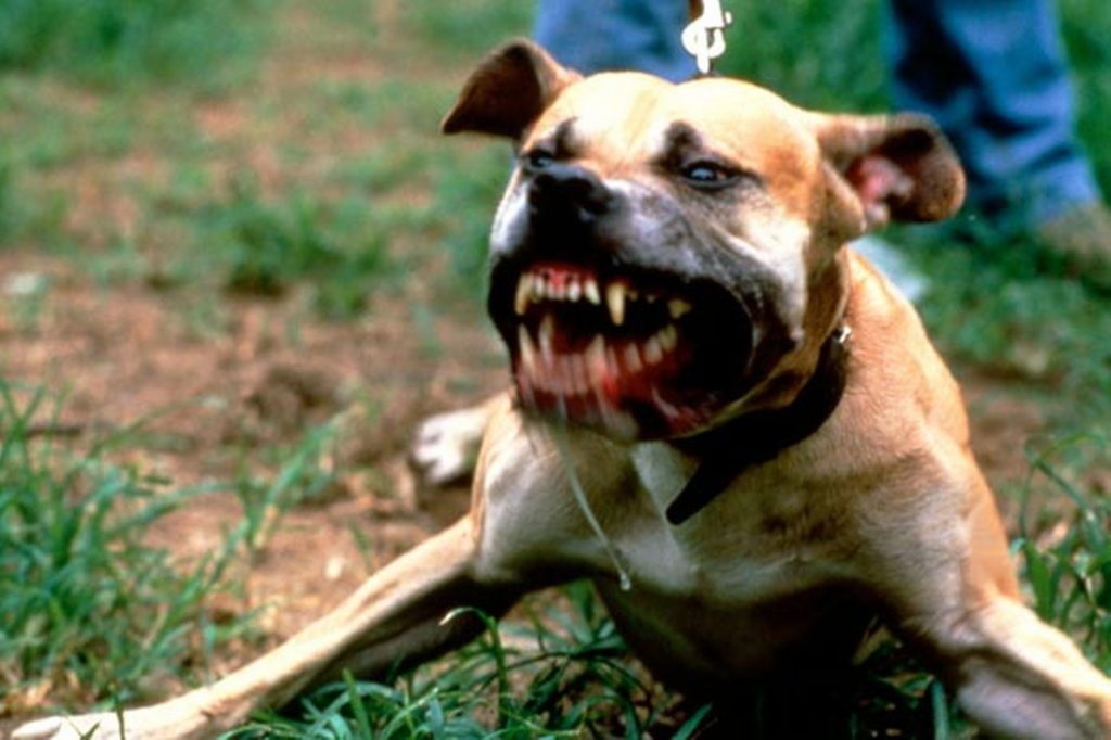 dogs pit bulls pictures download