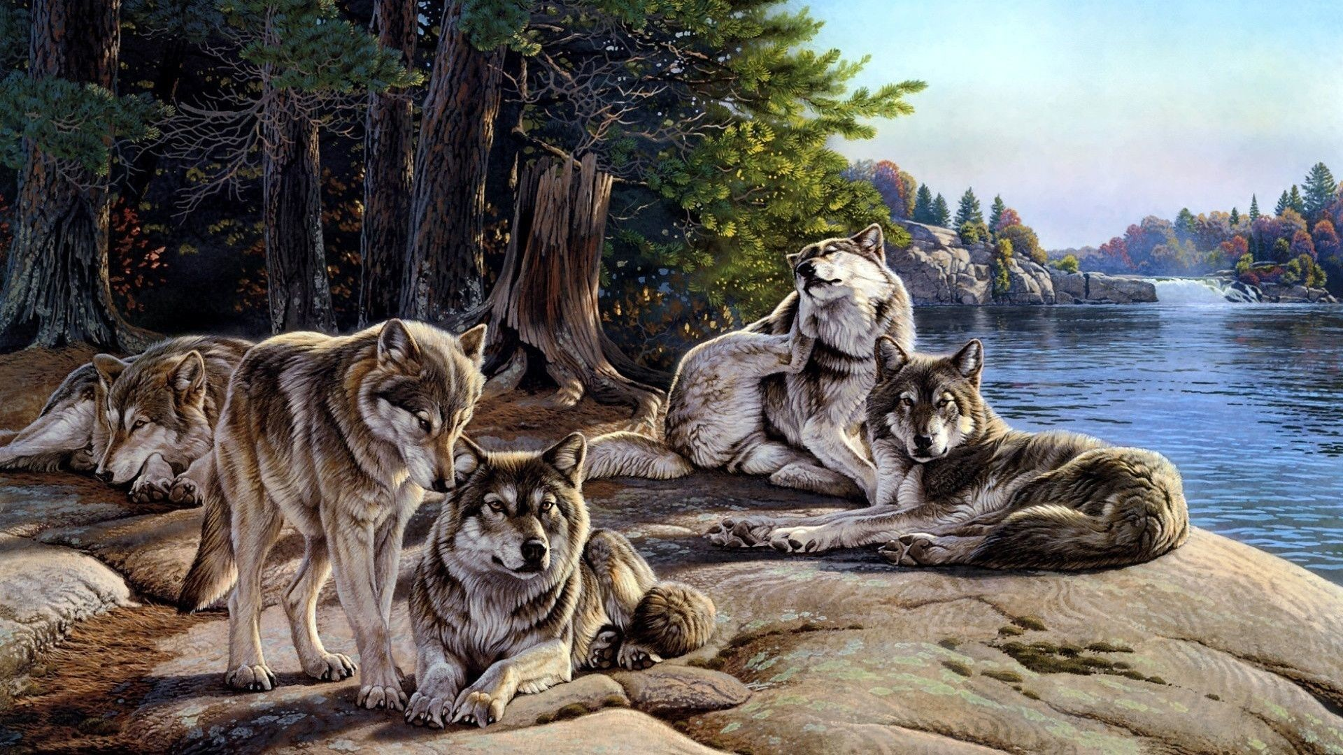 55 Pack Of Wolves