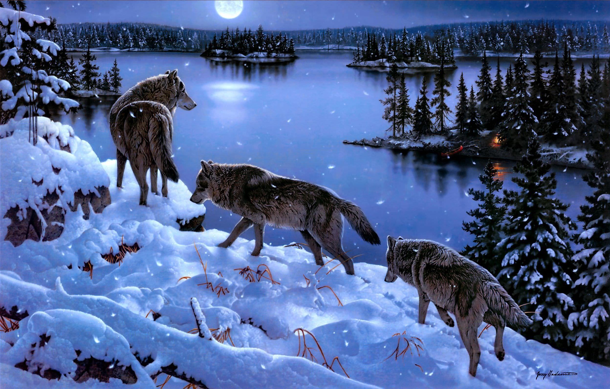 Hd Resolution Wolf Background