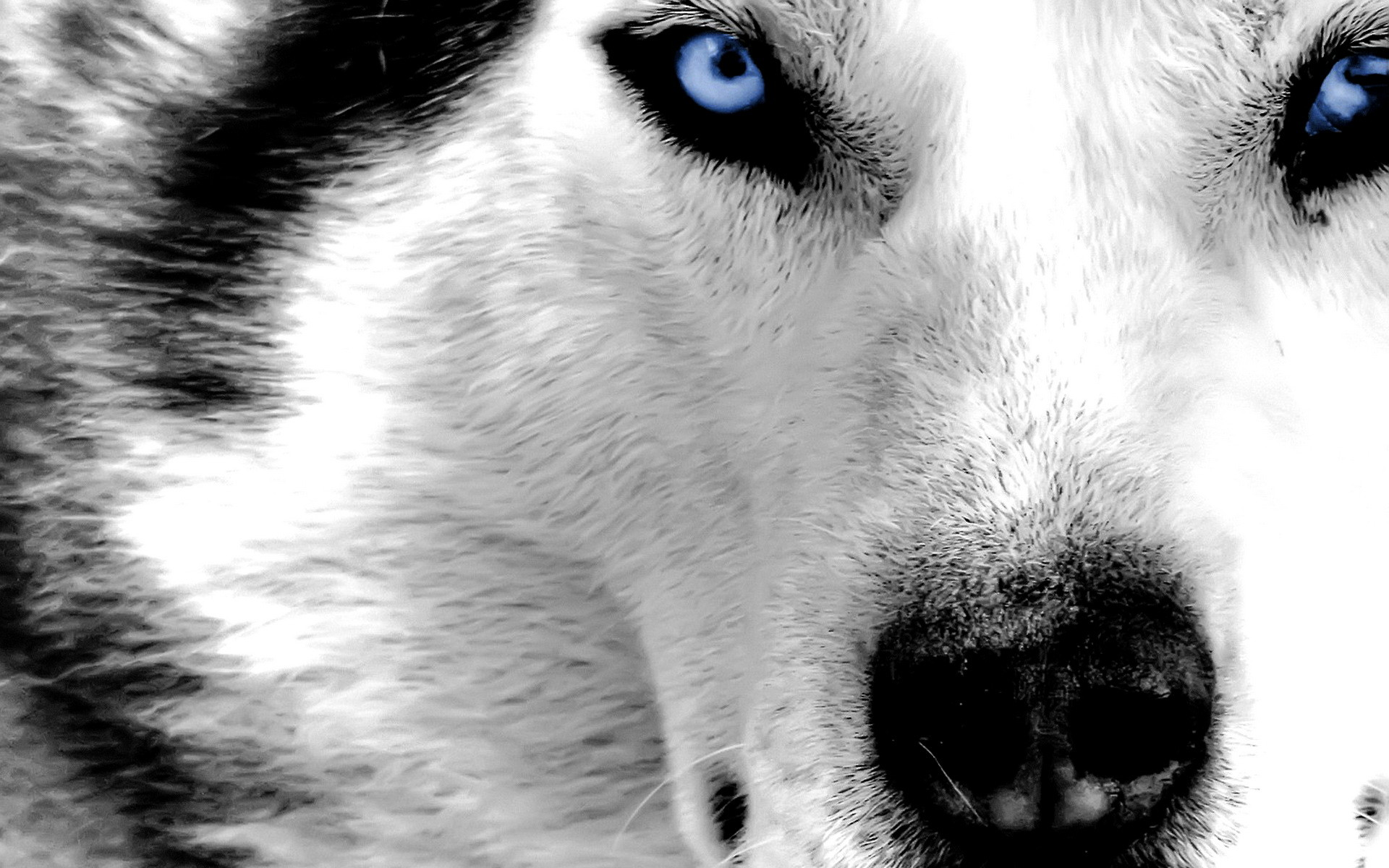 Explore Game Of Thrones, White Wolves, and more!