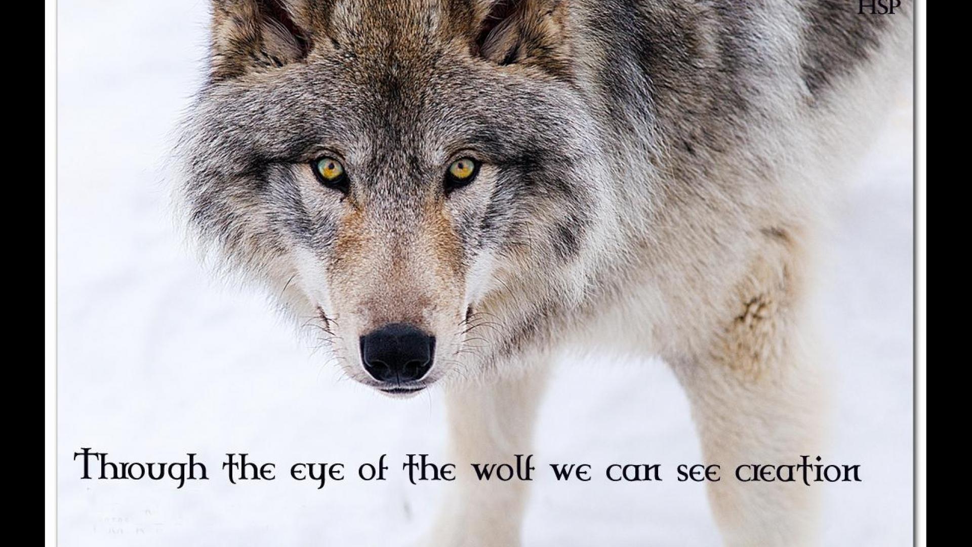 Download Wallpaper ID 1566801 – Desktop Nexus Animals   ~ Wolf Prayers &  Animal Wisdom ~   Pinterest   Wolf, Wisdom and Animal