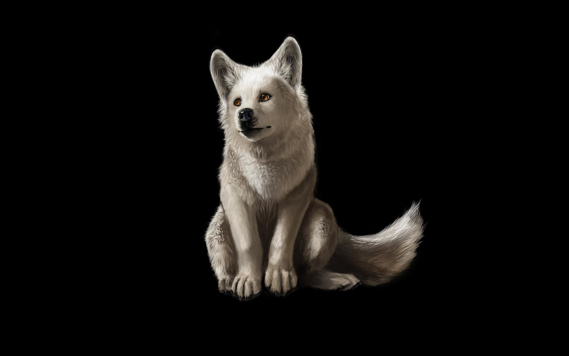 Wallpapers For > Cool White Wolf Backgrounds