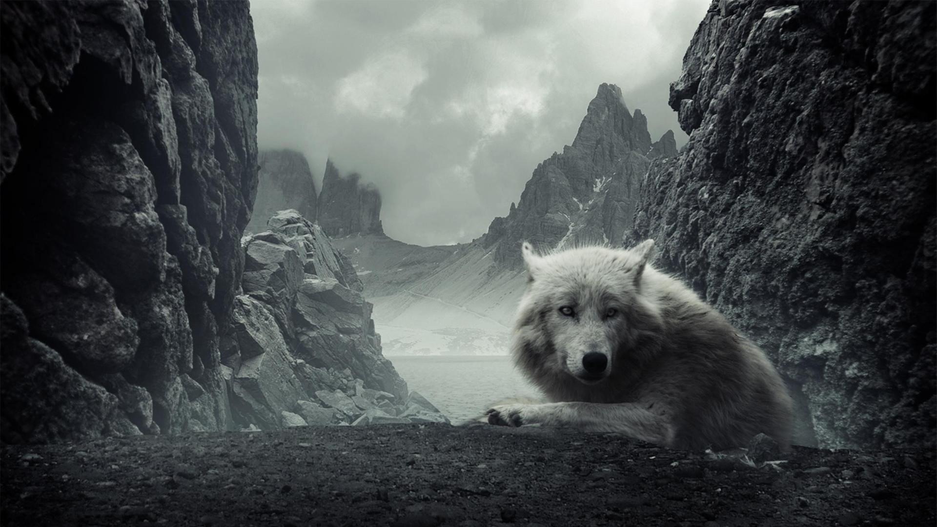Wolf Wolves HD Wallpaper #2675