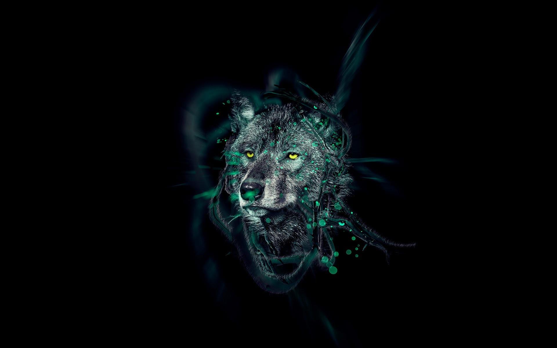 Black wolf wallpaper hd HD Wallpapers Pinterest Wolf