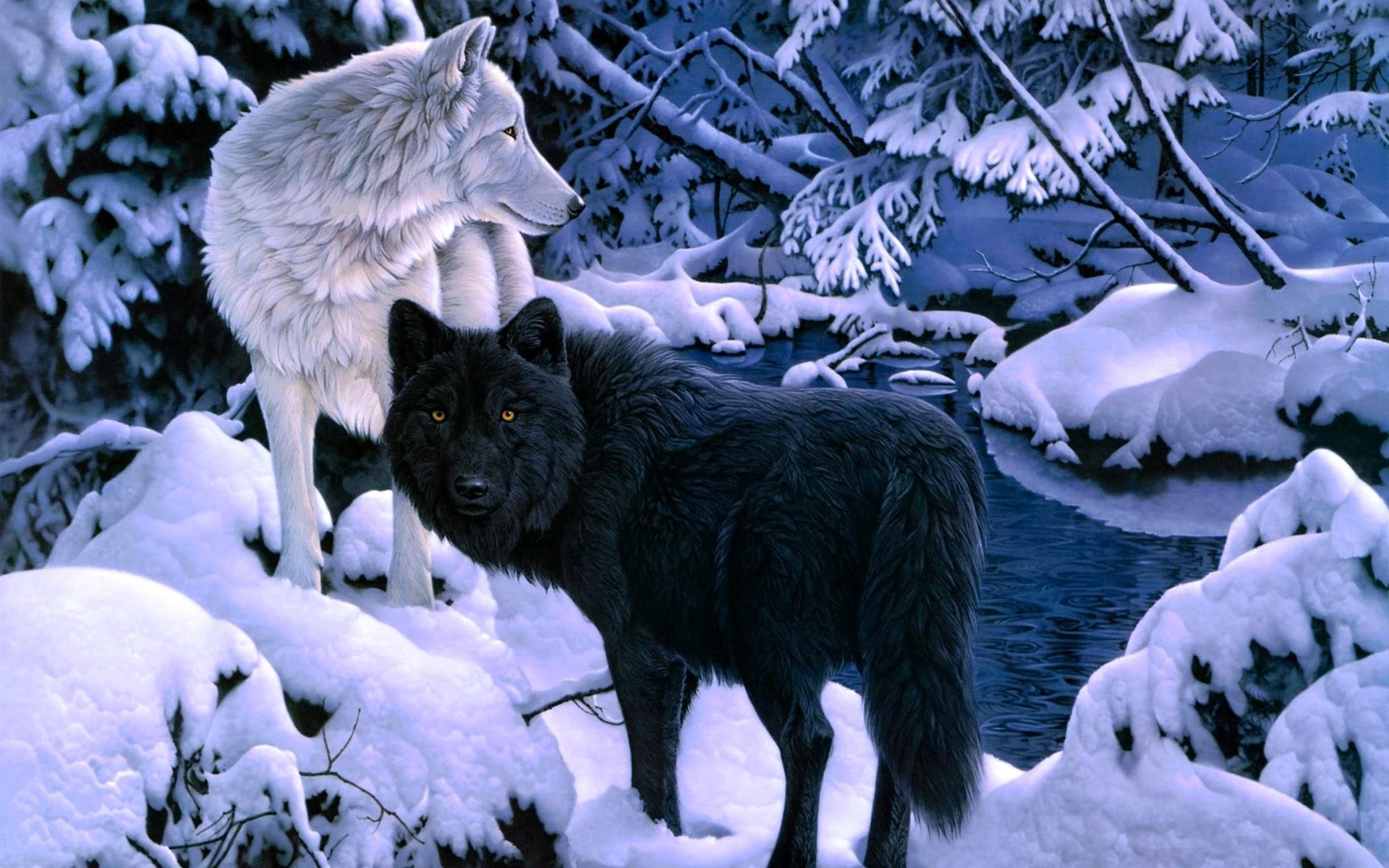 Wolf Wallpaper