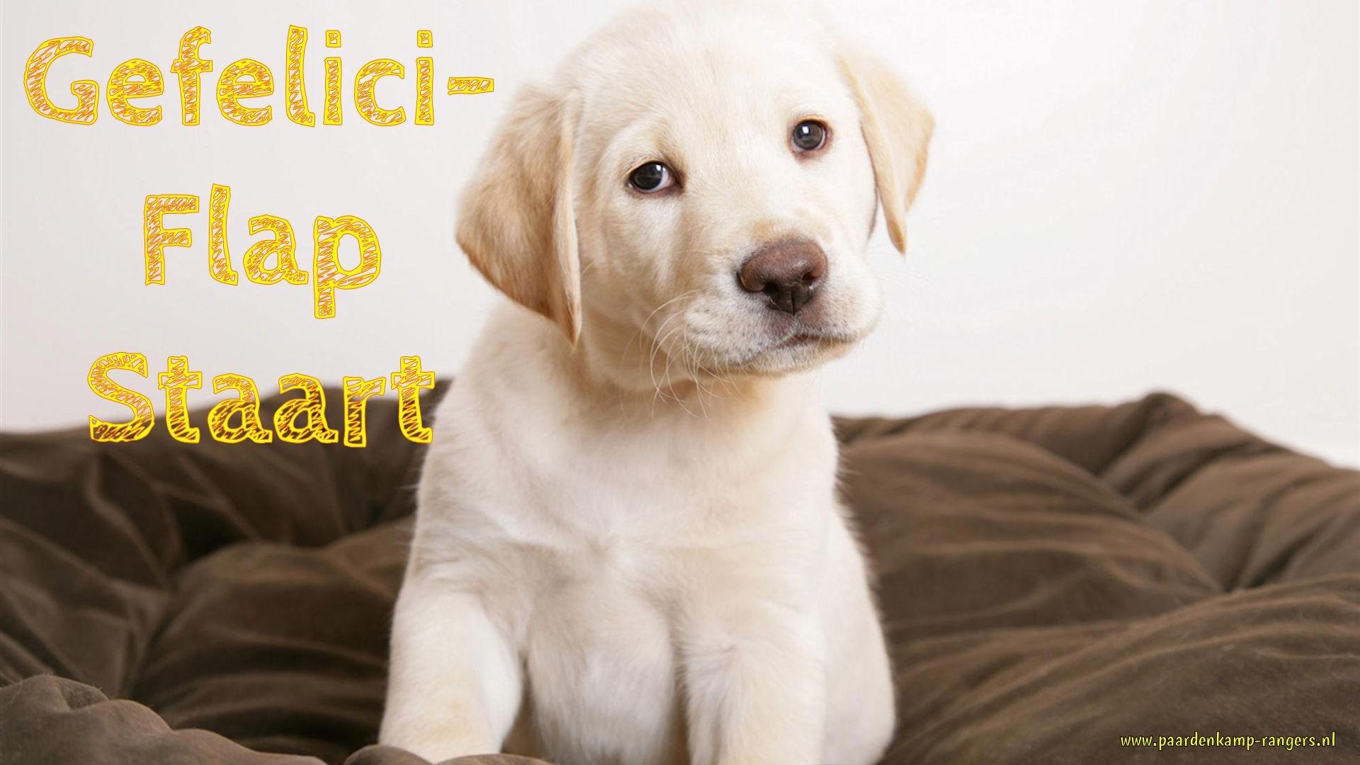 Labrador Puppy Animal HD desktop wallpaper, Dog wallpaper, Puppy wallpaper, Labrador  wallpaper – Animals no.