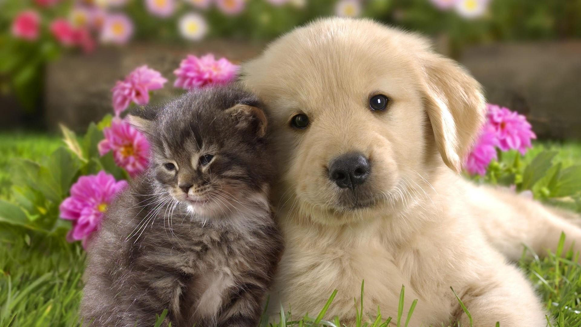 Preview wallpaper puppy, kitten, grass, flowers, couple, friendship  1920×1080