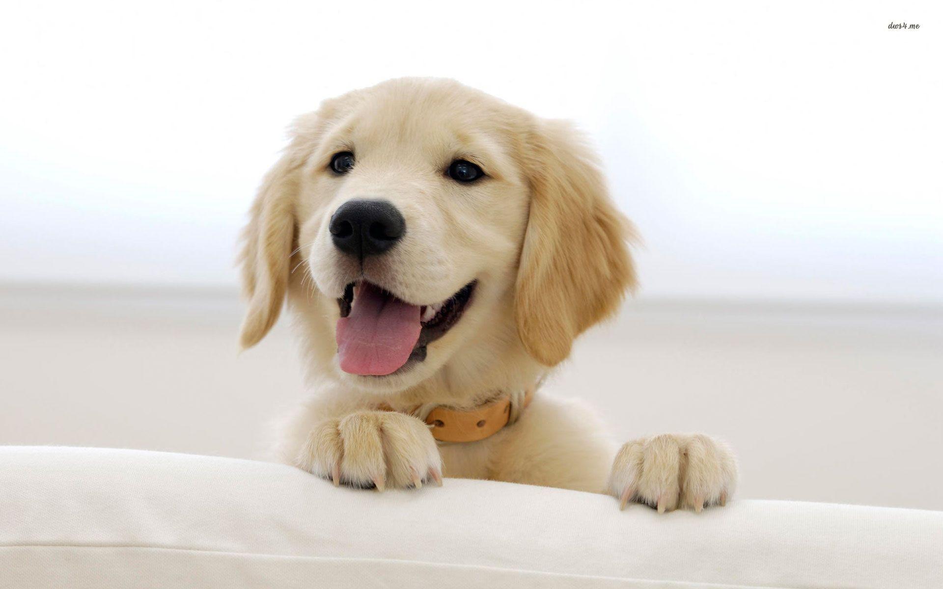 Pinterest · Download. « Puppy Desktop Background Wallpaper