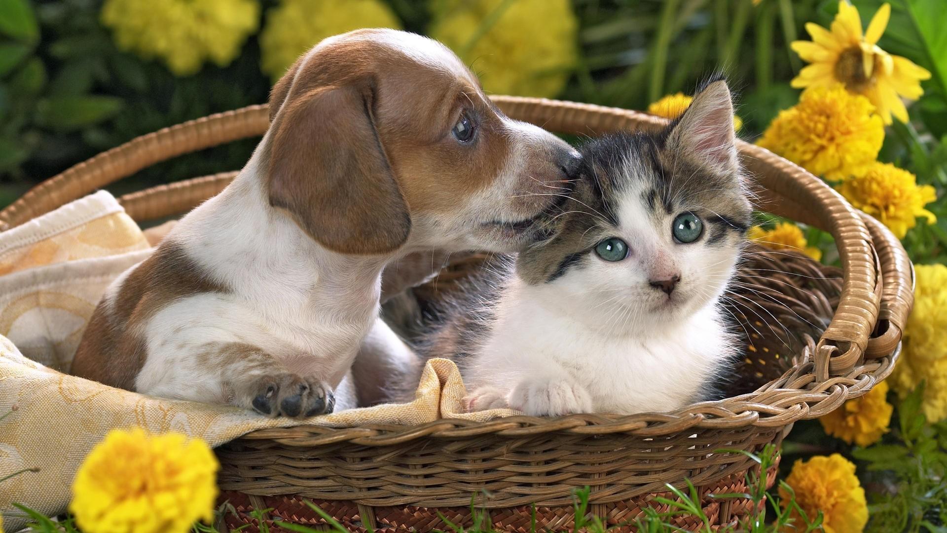 Preview wallpaper puppy, kitten, basket, flowers, friendship 1920×1080