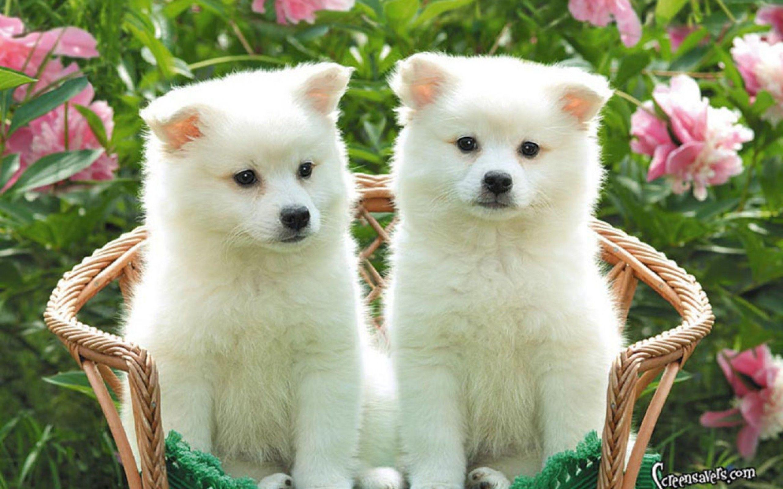Wallpapers For > Cute Puppy Desktop Wallpaper