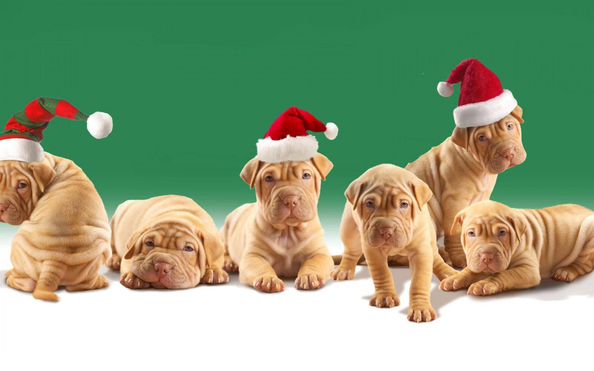 Christmas Puppy Desktop Wallpaper | wallpaper, wallpaper hd .
