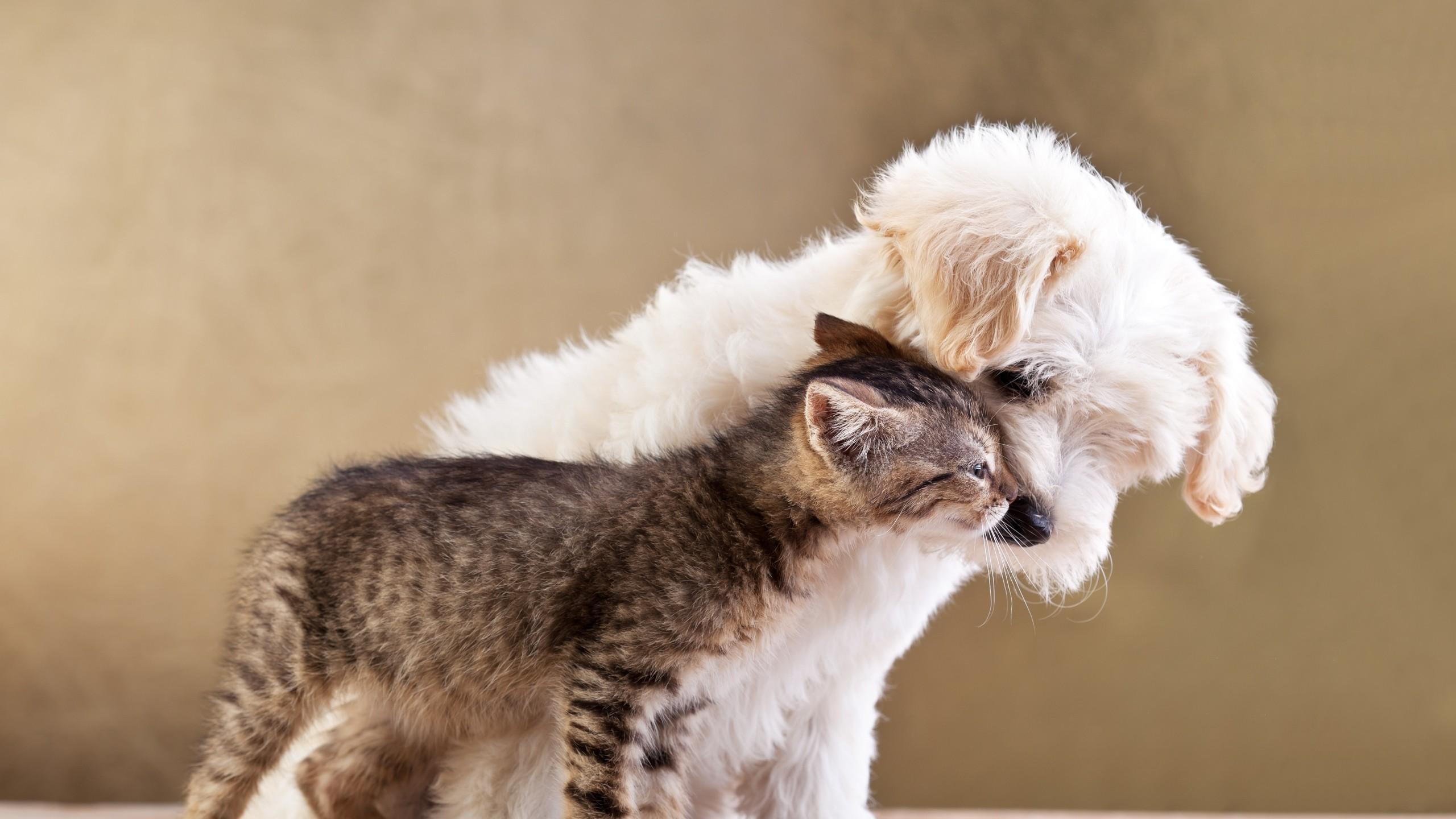 Preview wallpaper puppy, kitten, friends, animals, caring, tenderness  2560×1440