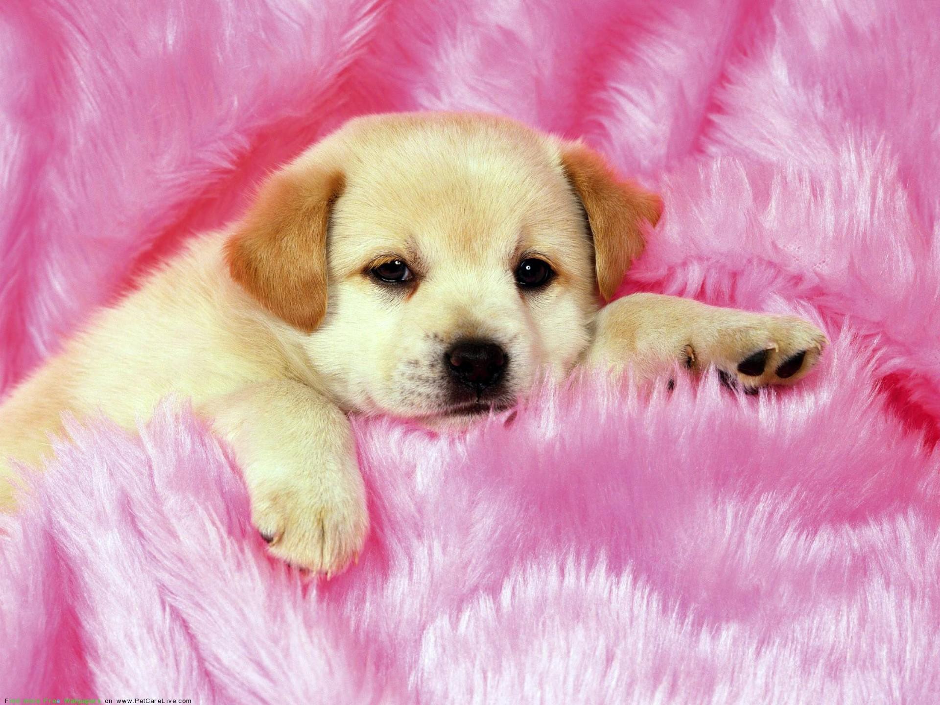 Pics Photos – Little Cute Dog Puppies Desktop Wallpaper .