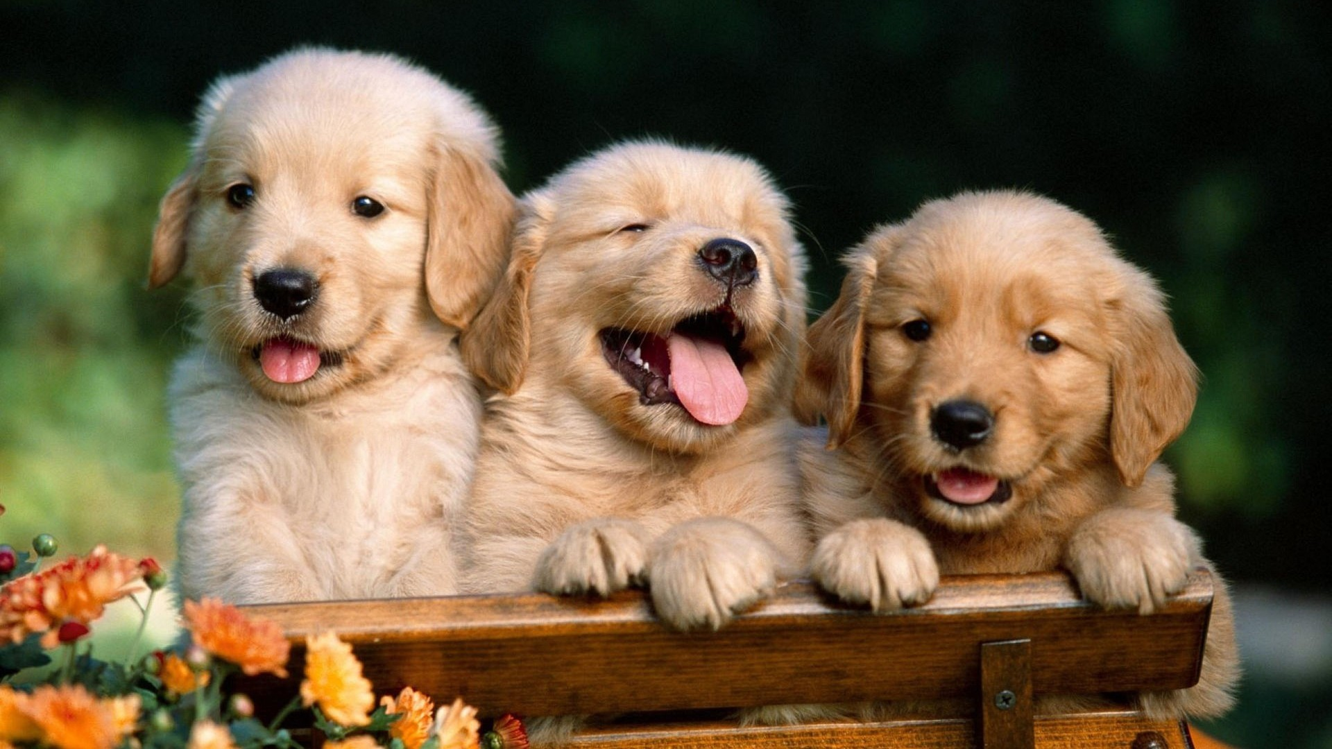 Kitten And Puppy Wallpapers Mobile