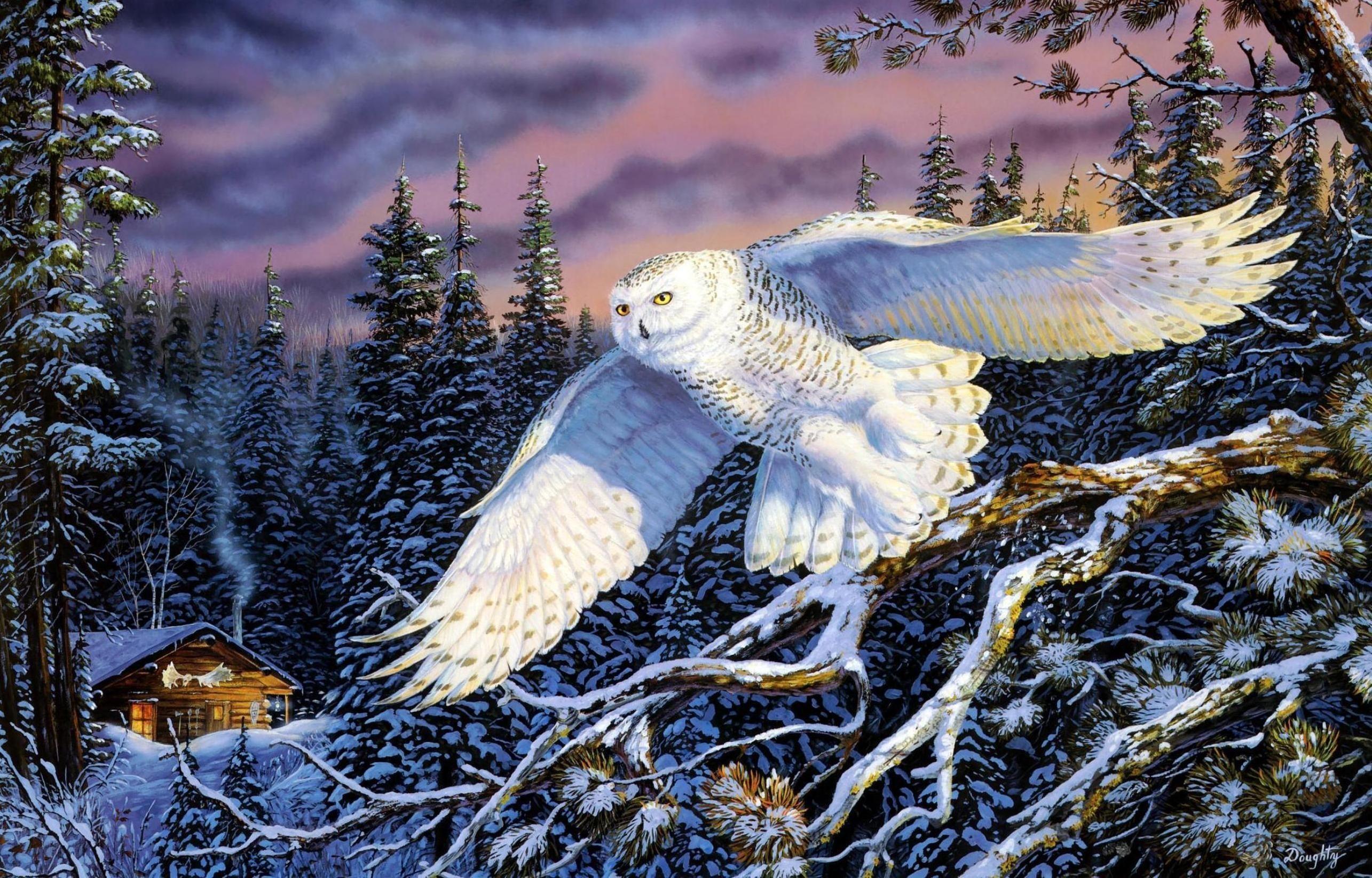 px hd wallpaper snowy owl by Franklin Edwards for :  pocketfullofgrace.com