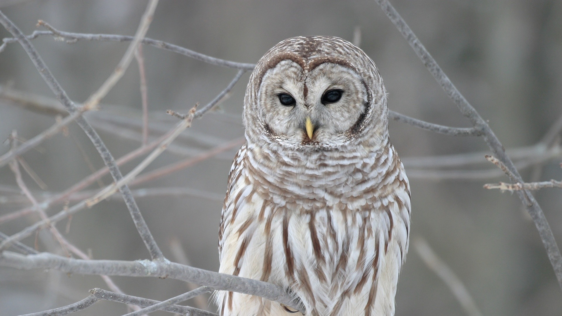 Cute & Sweet Owl Wallpapers HD images
