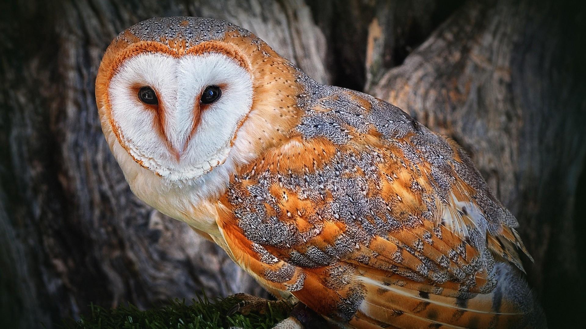 Preview wallpaper owl, beautiful, color, face, tree, bird, predator  1920×1080