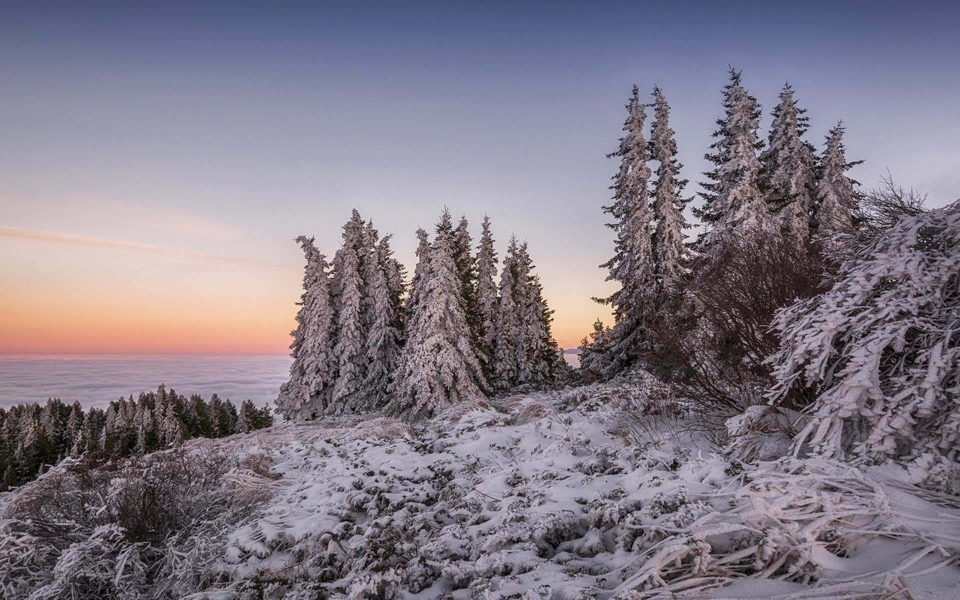 Snowy trees above the clouds Wallpaper 25026