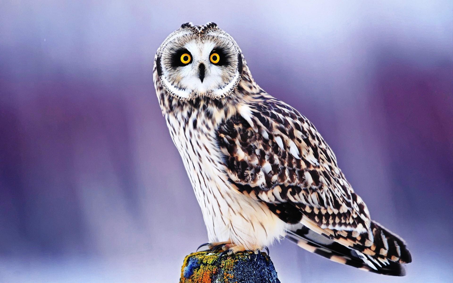 best ideas about Owl wallpaper iphone on Pinterest Owl